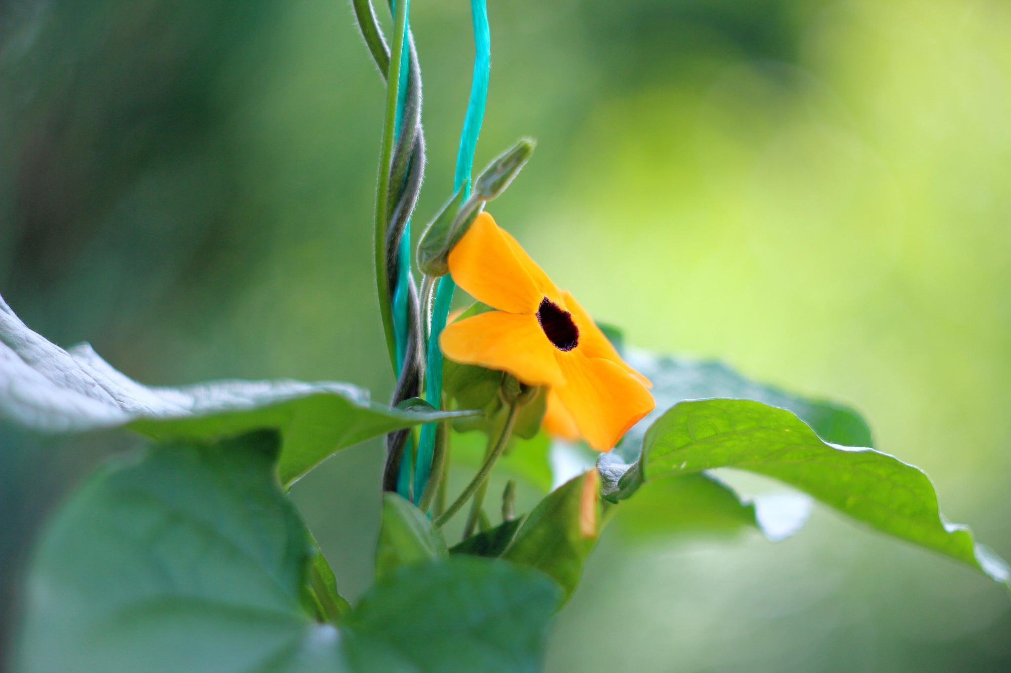 yellow flower by Stanislaw Bomba
