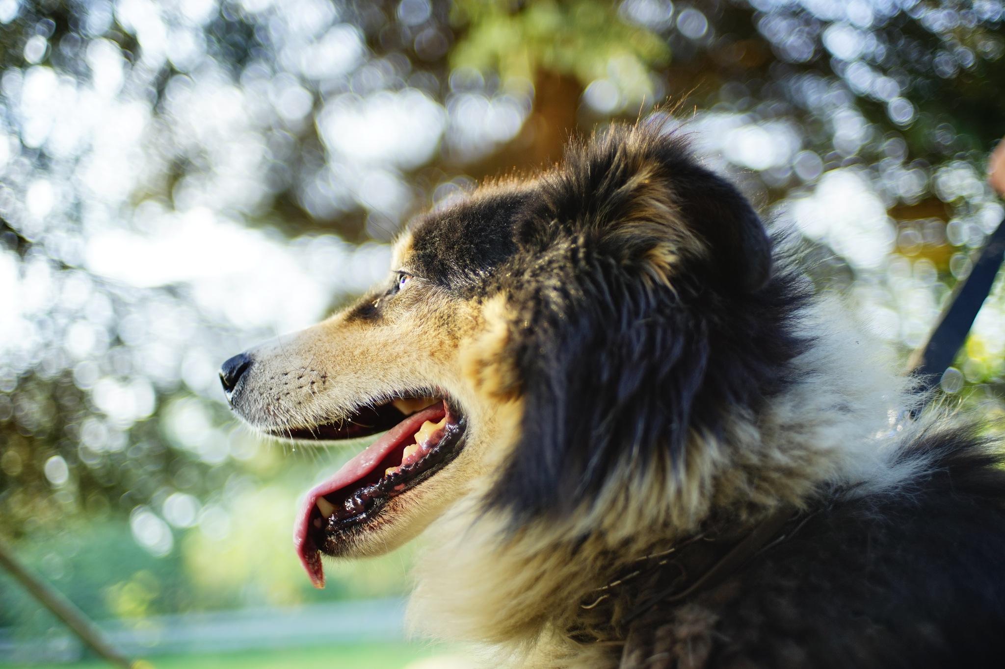 portrait of the doggy by Stanislaw Bomba