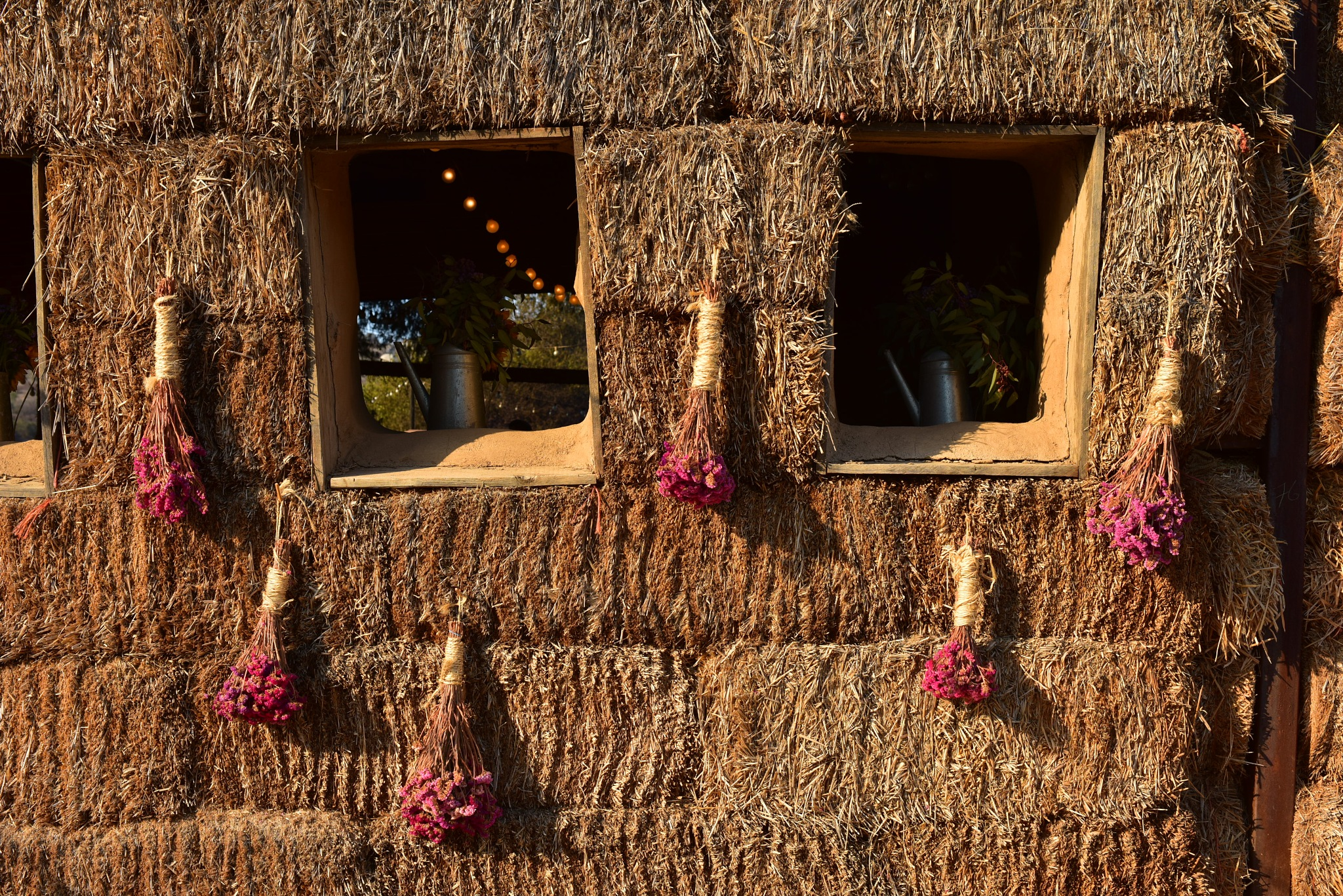 Window Flowers by fernandezoscar