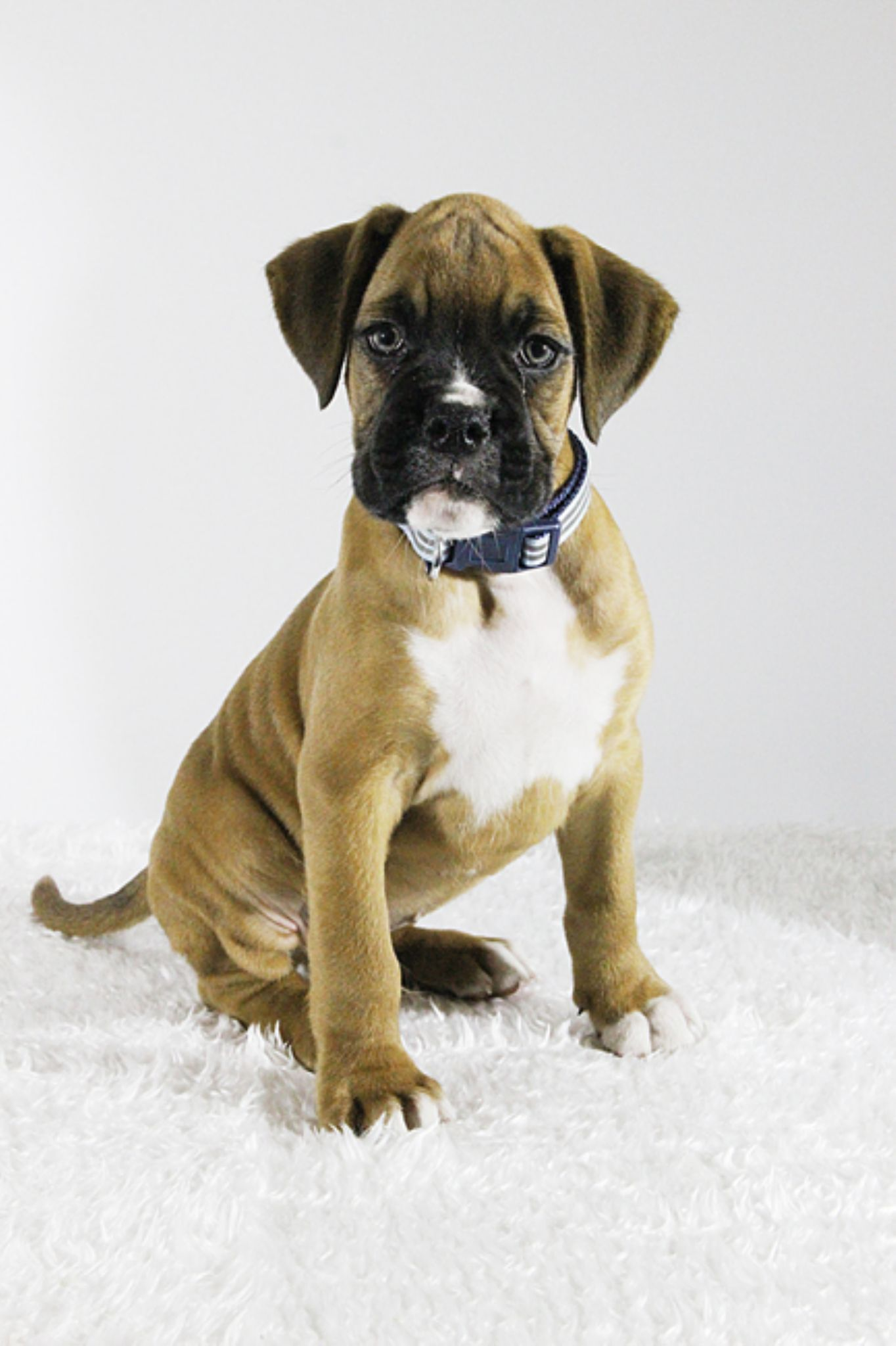 my new puppy by pblphotography