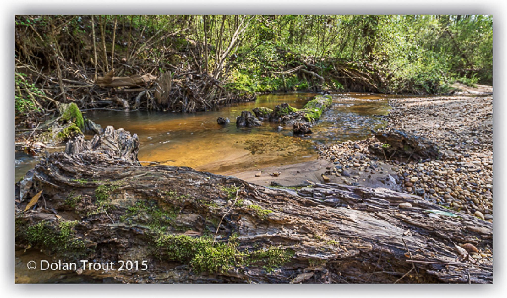 Still Creek by bluesydude
