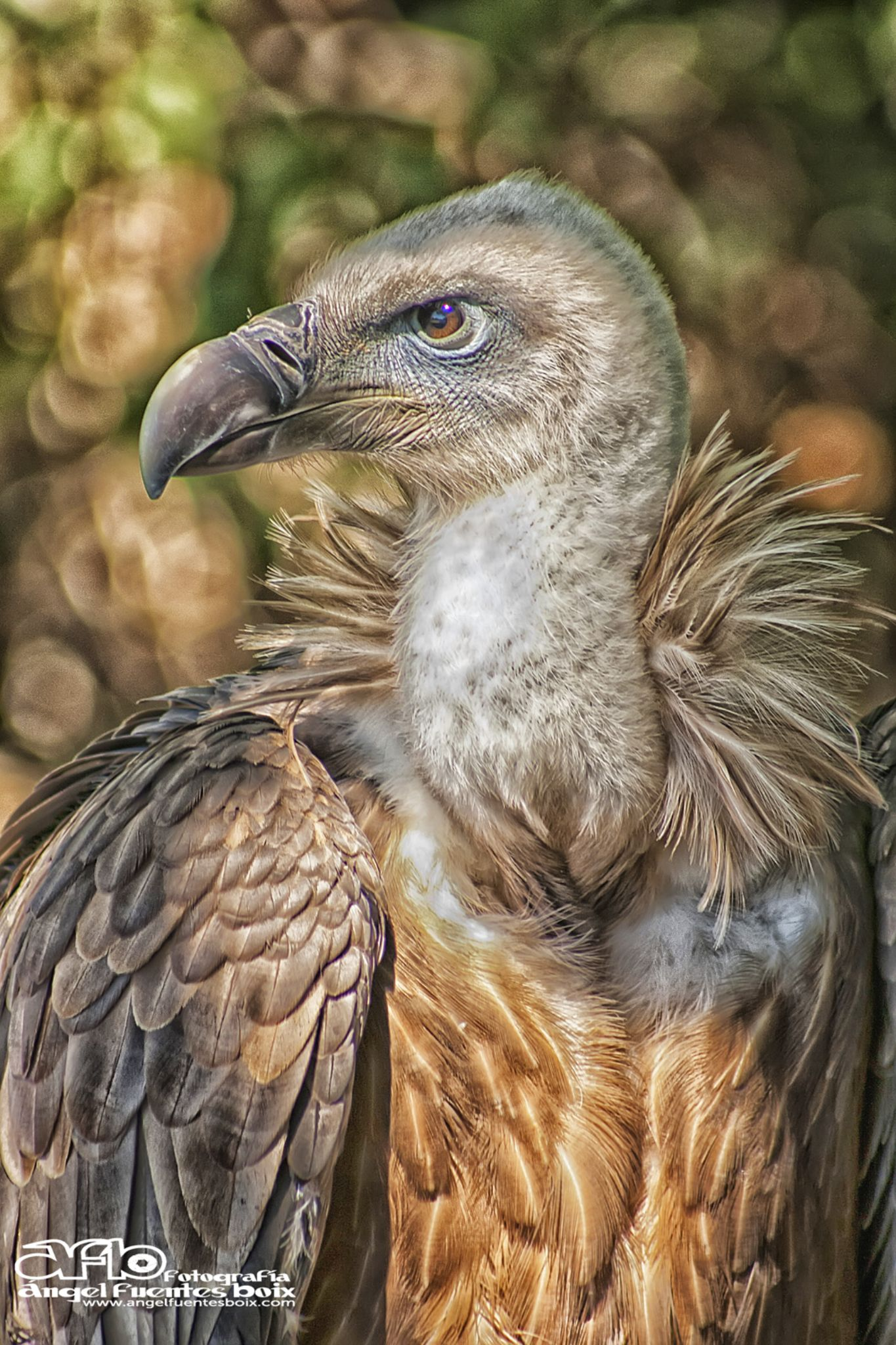 Tierna mirada by angel.fuentesboixFotografia