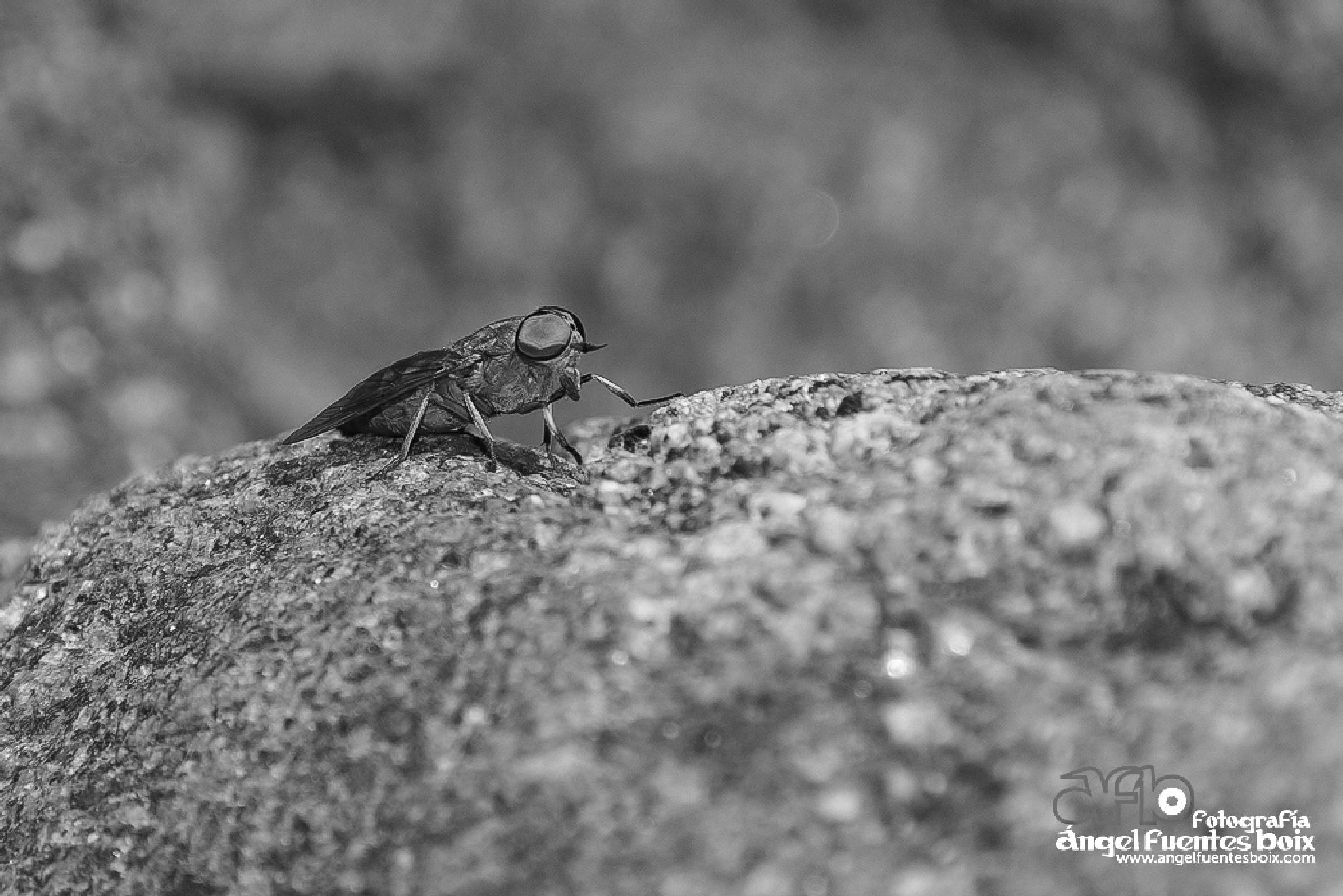 Photo in Black and White #blanco y negro #macro #animals