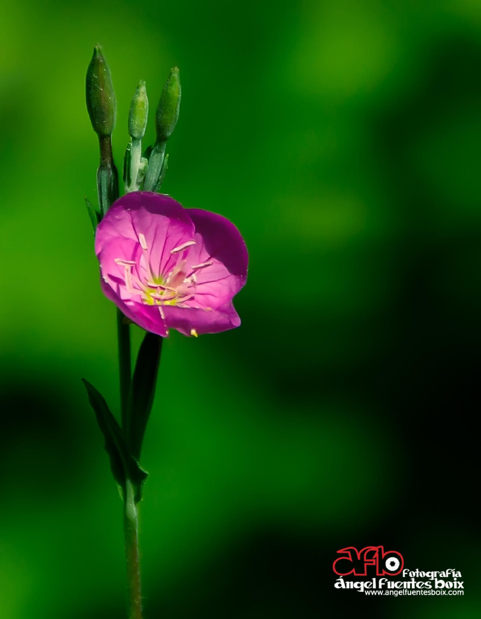 Photo in Nature #macro #flores #flowers
