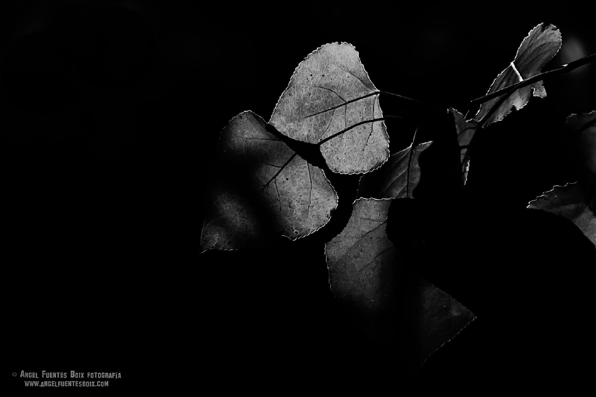 Radiografia by angel.fuentesboixFotografia