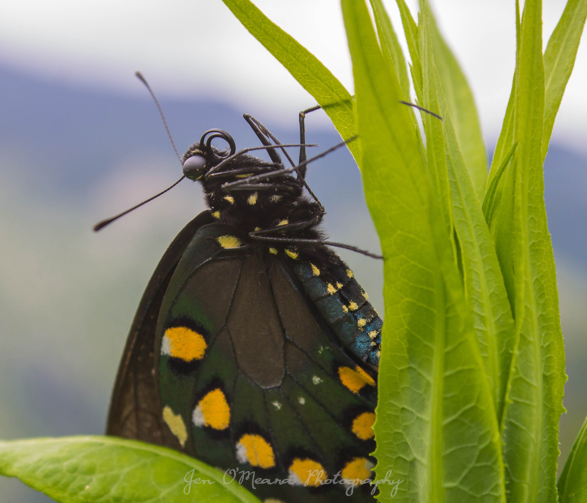 Just when the caterpillar thought the world was over, she became a butterfly by Jen O'Meara