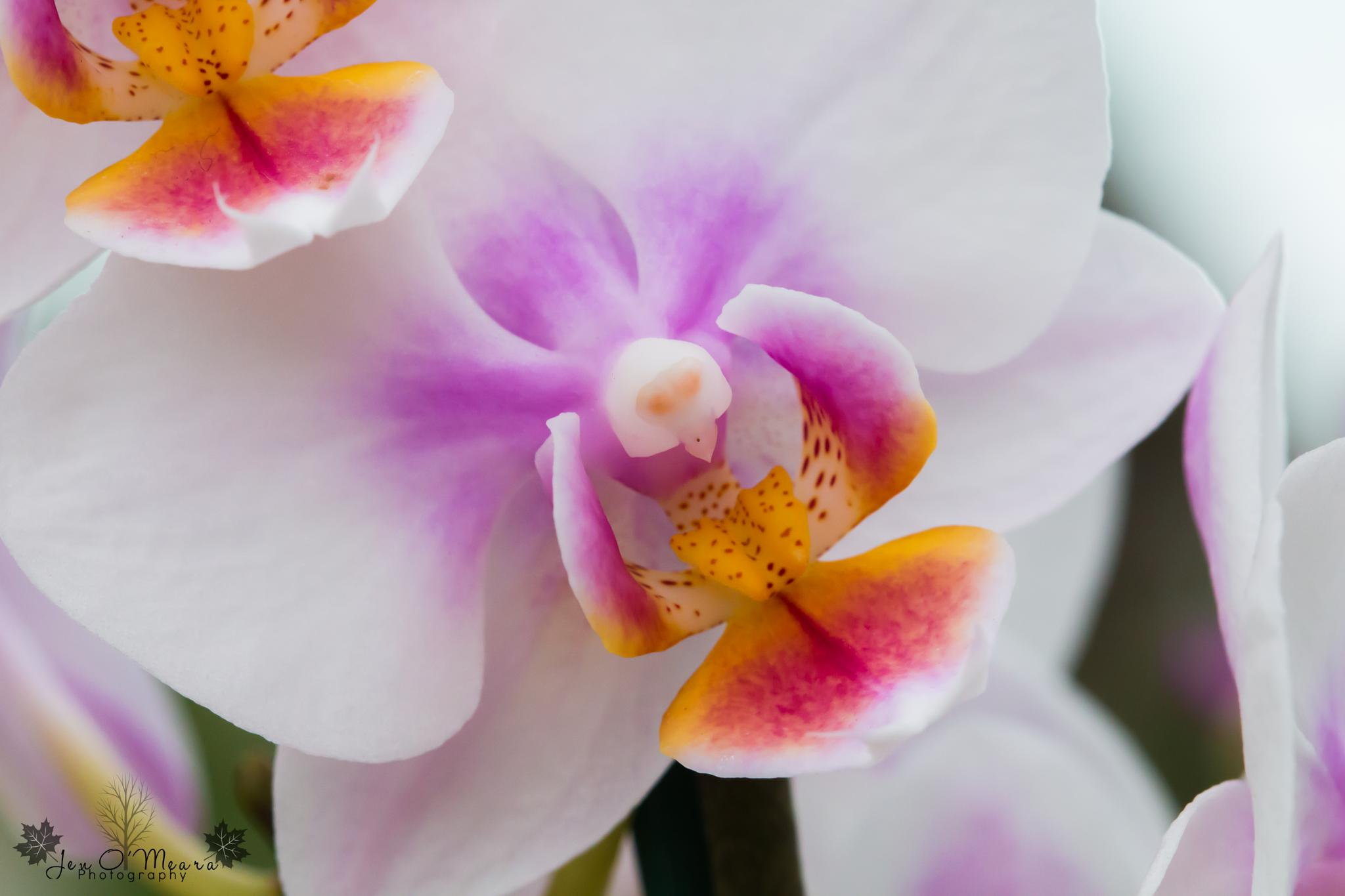 Photo in Macro #macro #close up #flowers #orchid