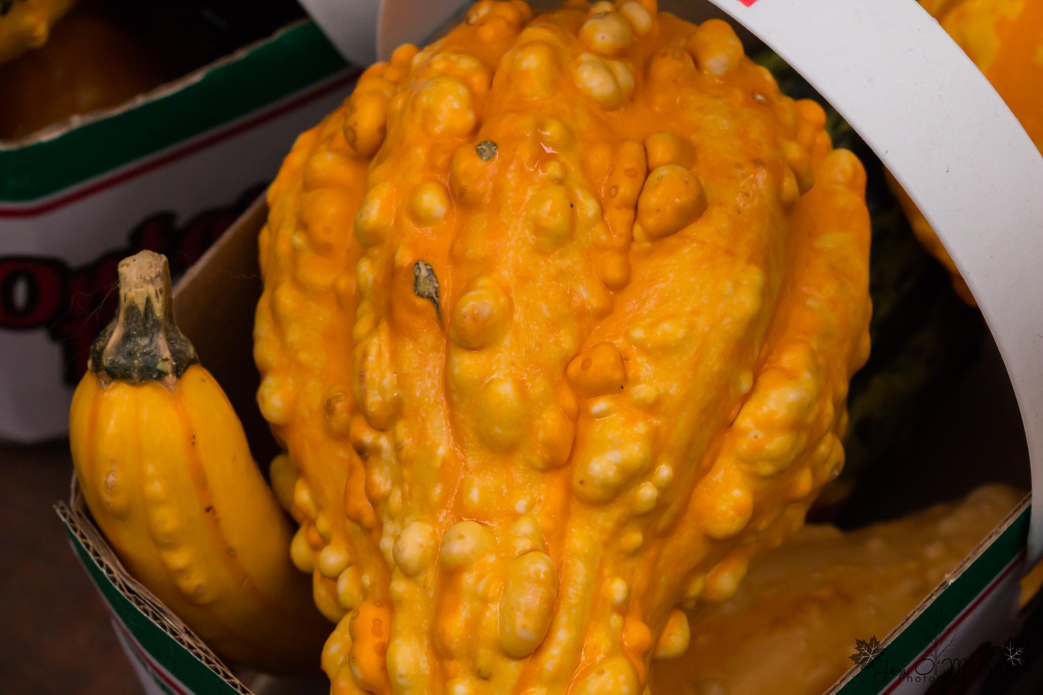 Fall Gourds by Jen O'Meara