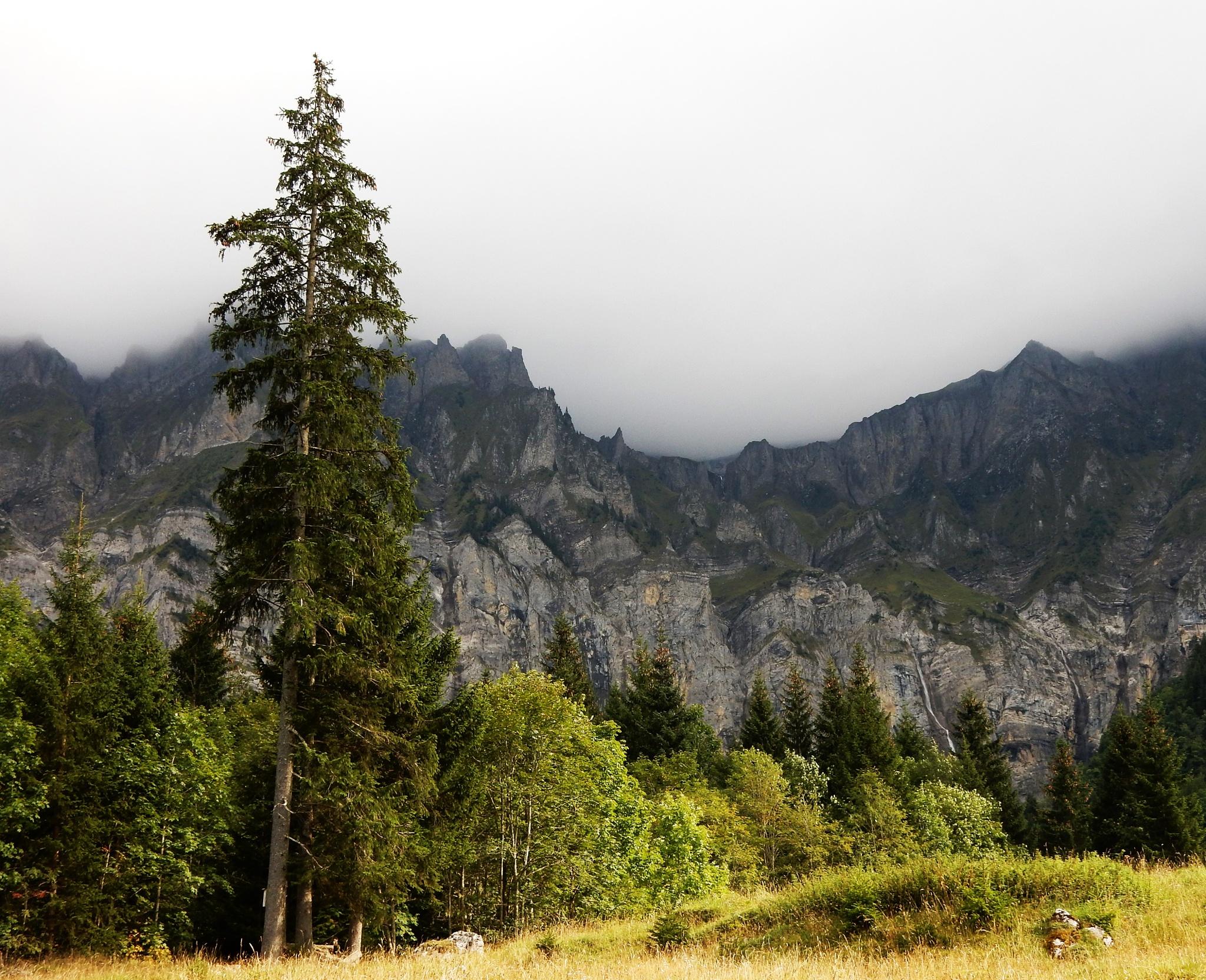 Big Tree by silvio.zurbrugg