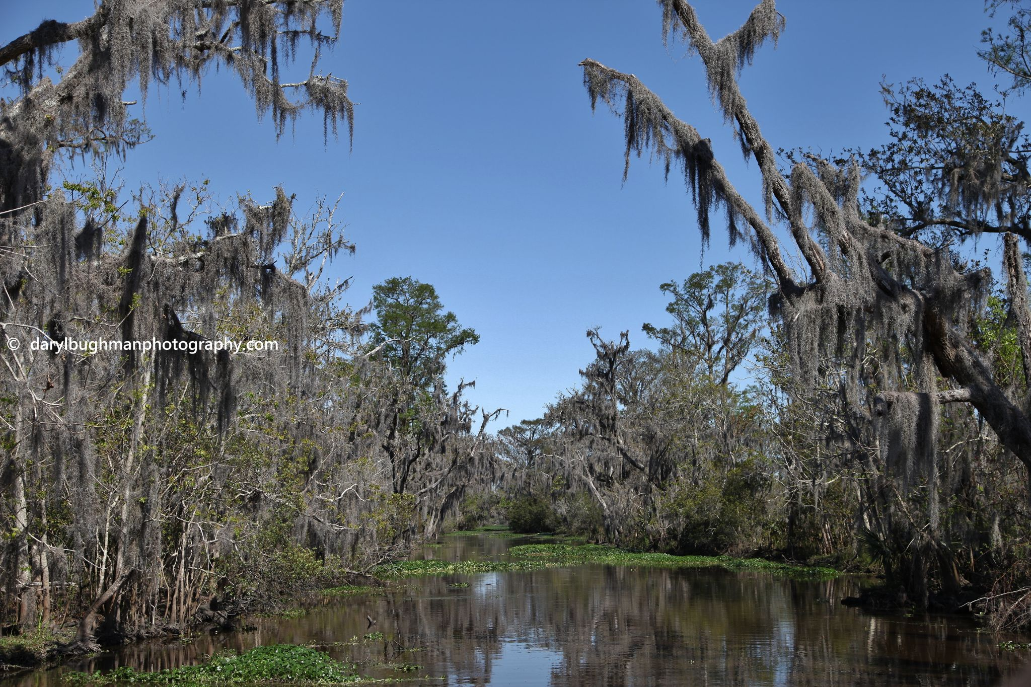the Bayou by daryl.bughman