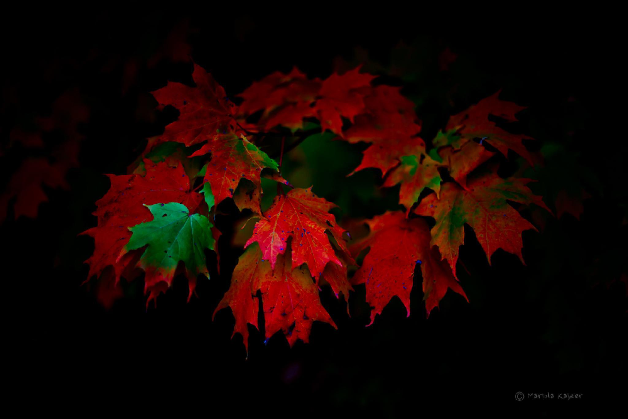 leaves  by mariola.kajzer.1