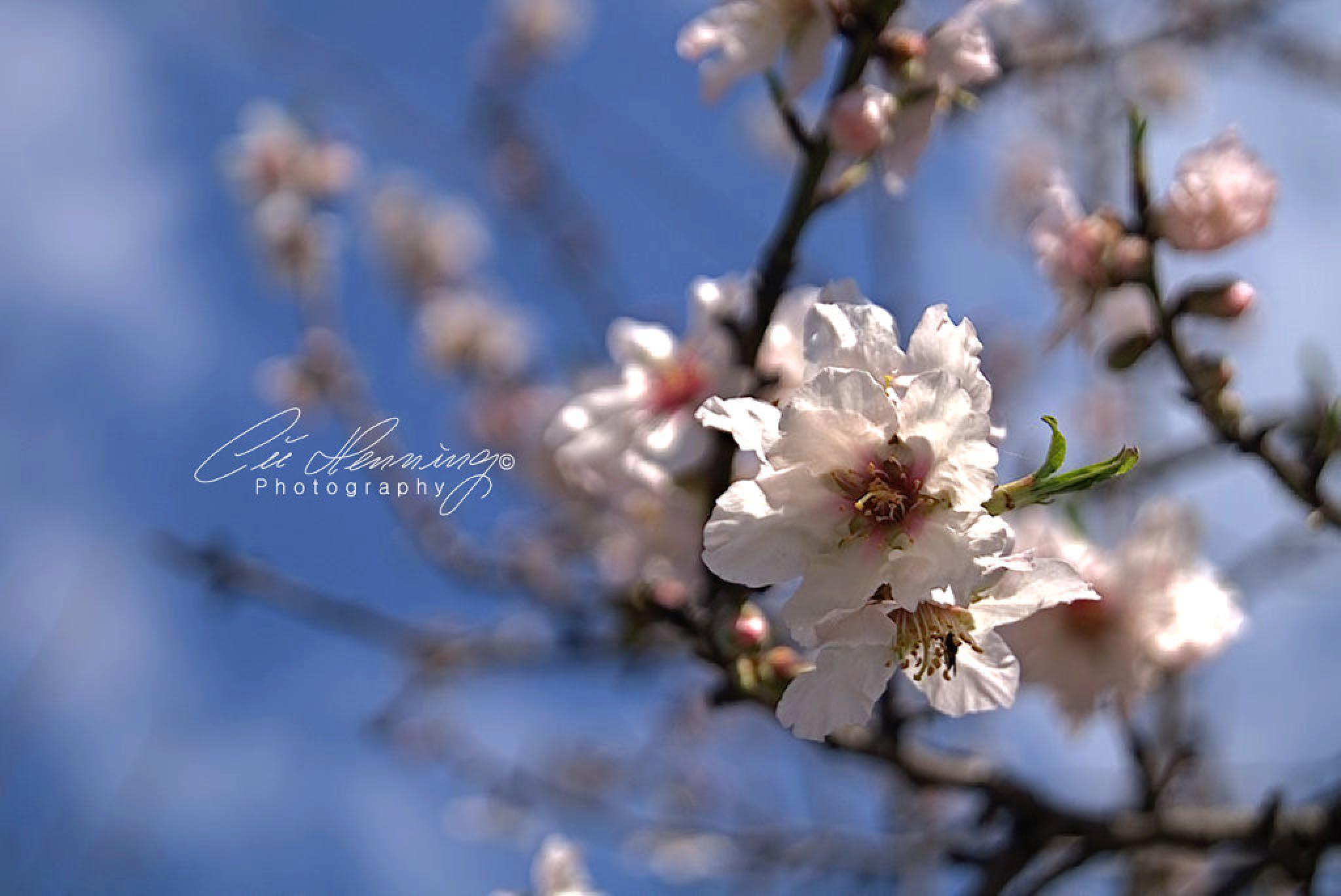 Blossom Time by Cüneyt Gakçı