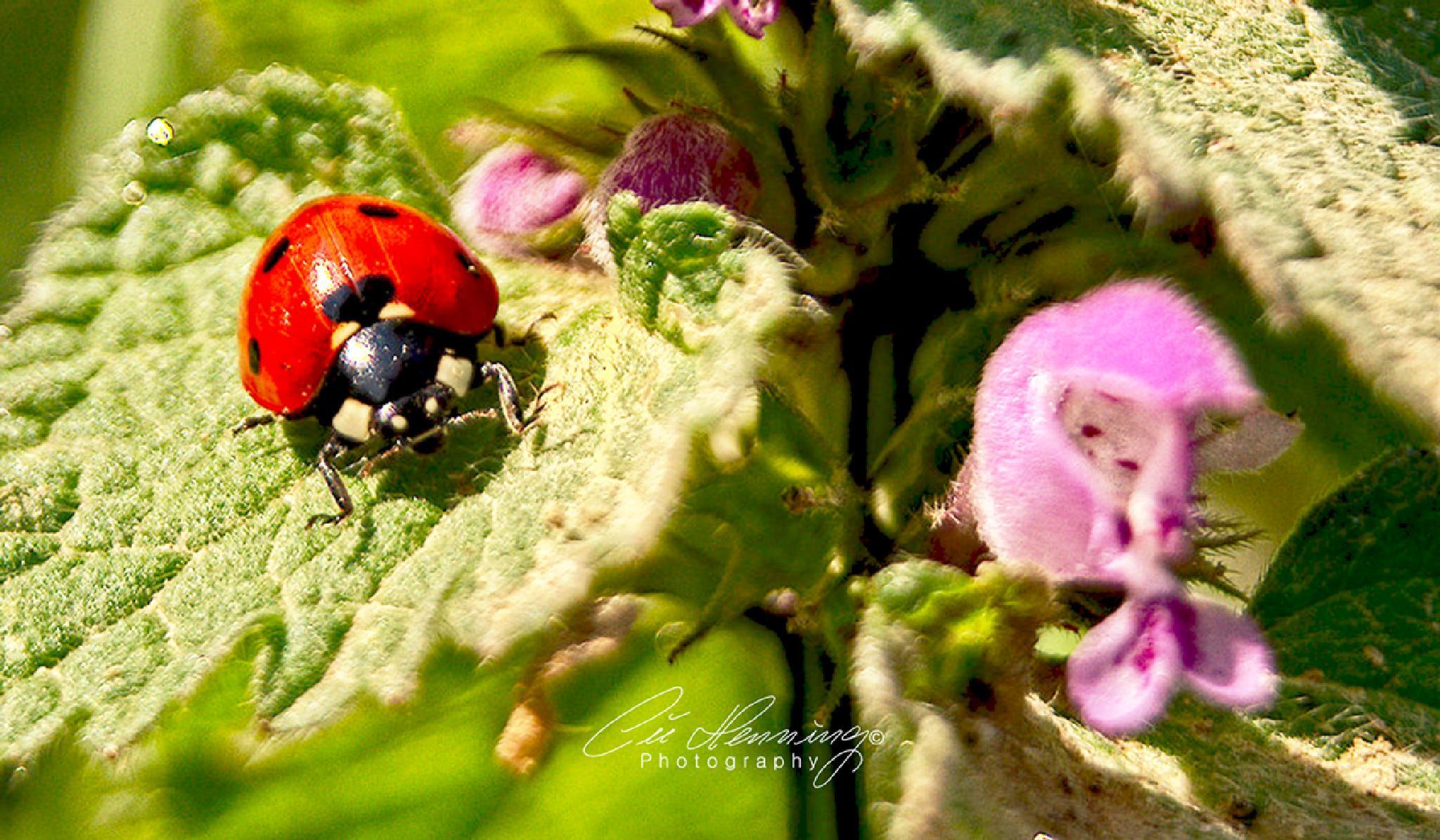 Hello Beetle by Cüneyt Gakçı