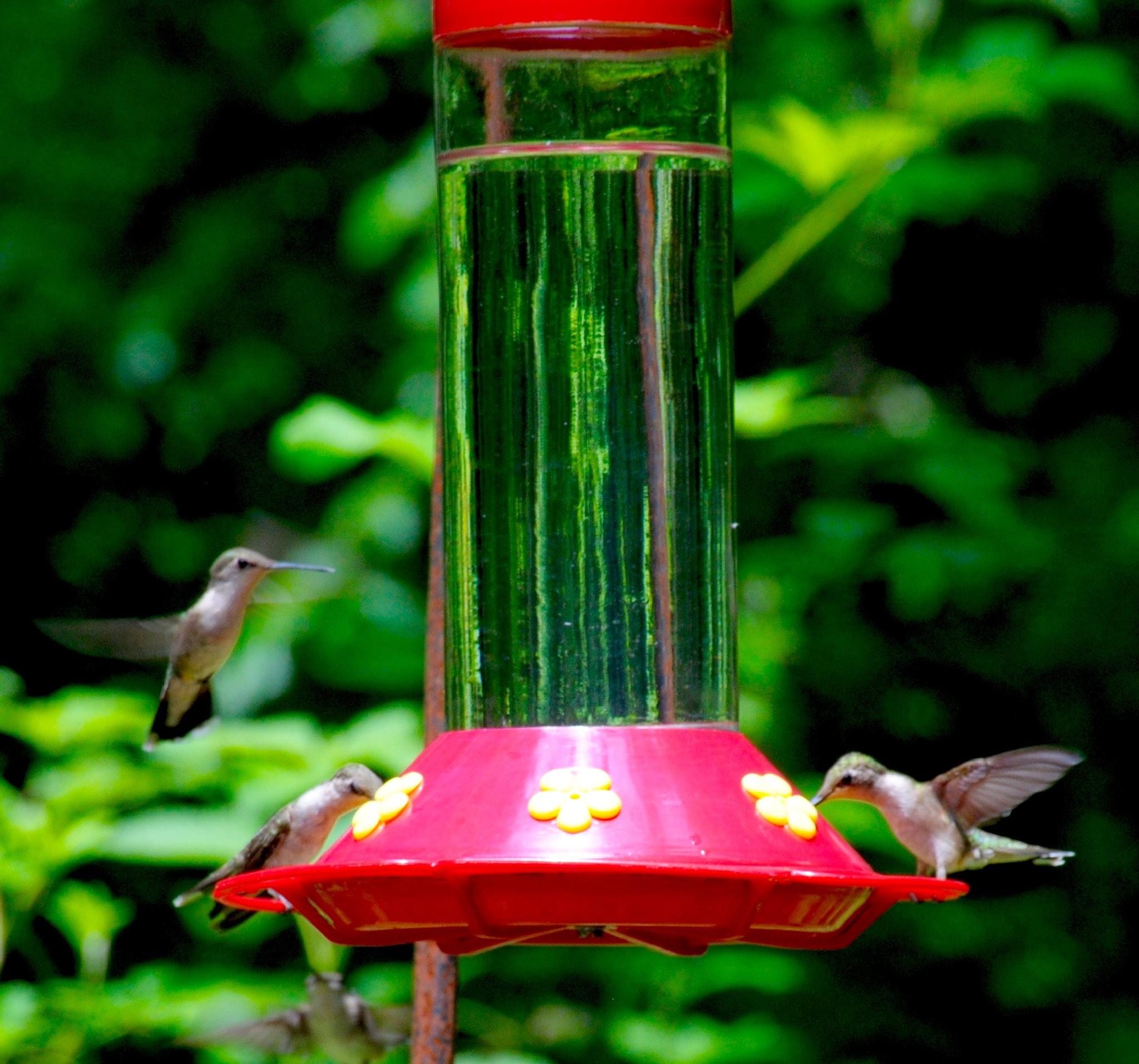 Photo in Nature #hummingbird #bird #random #macro