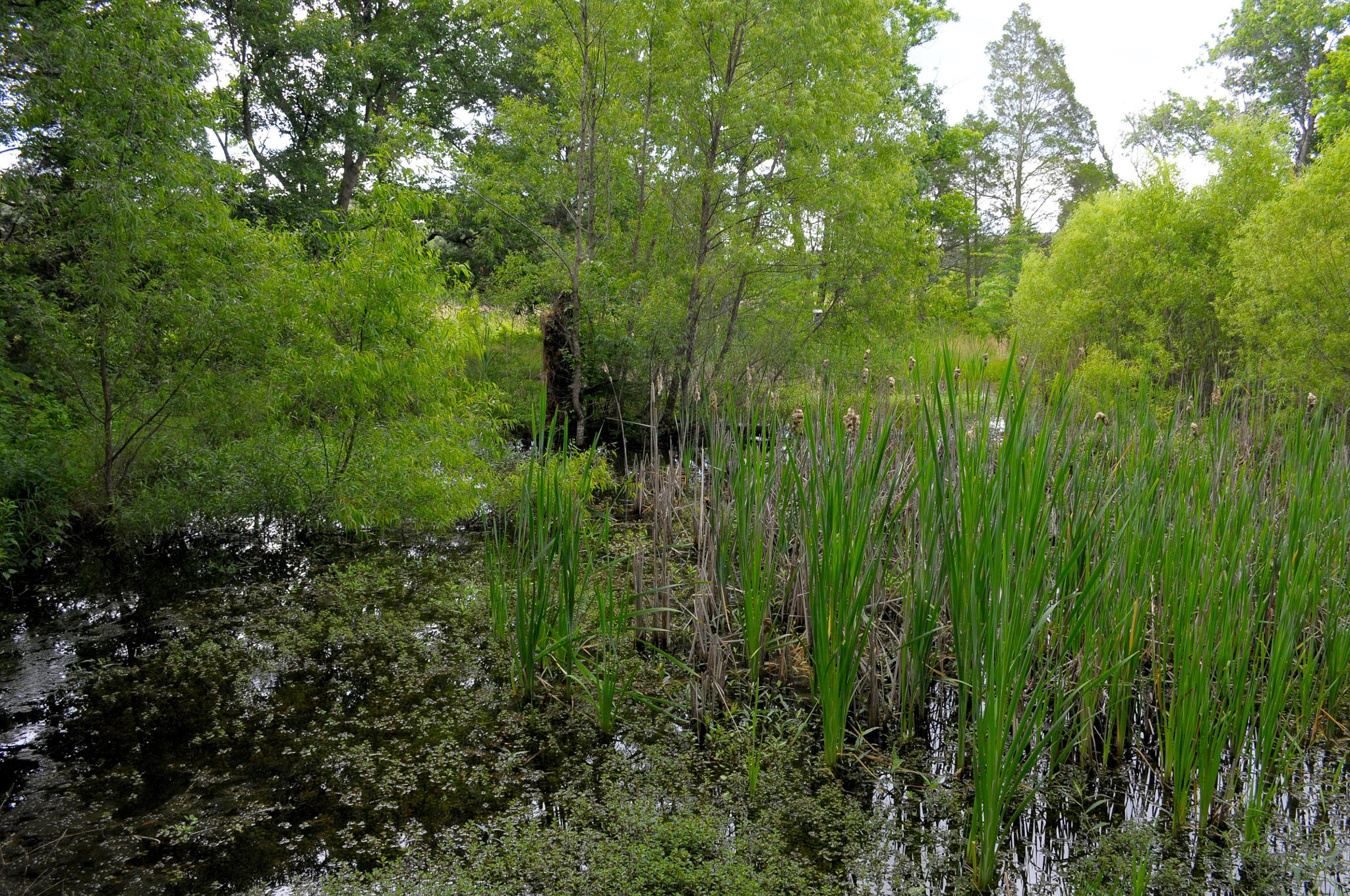 Photo in Nature #green #water #random