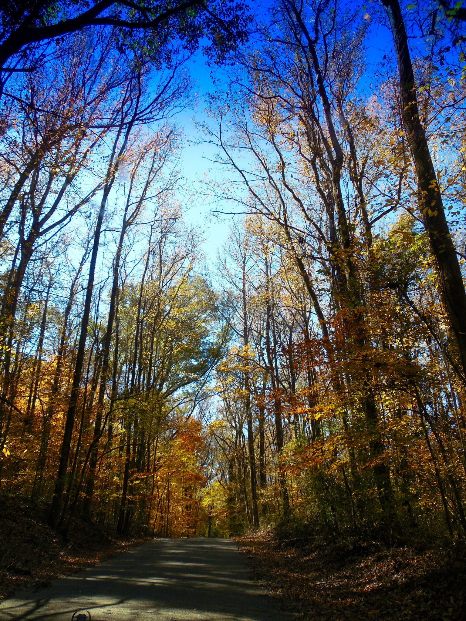 Meeman-Shelby Forest State Park, Millington, TN by marcchia