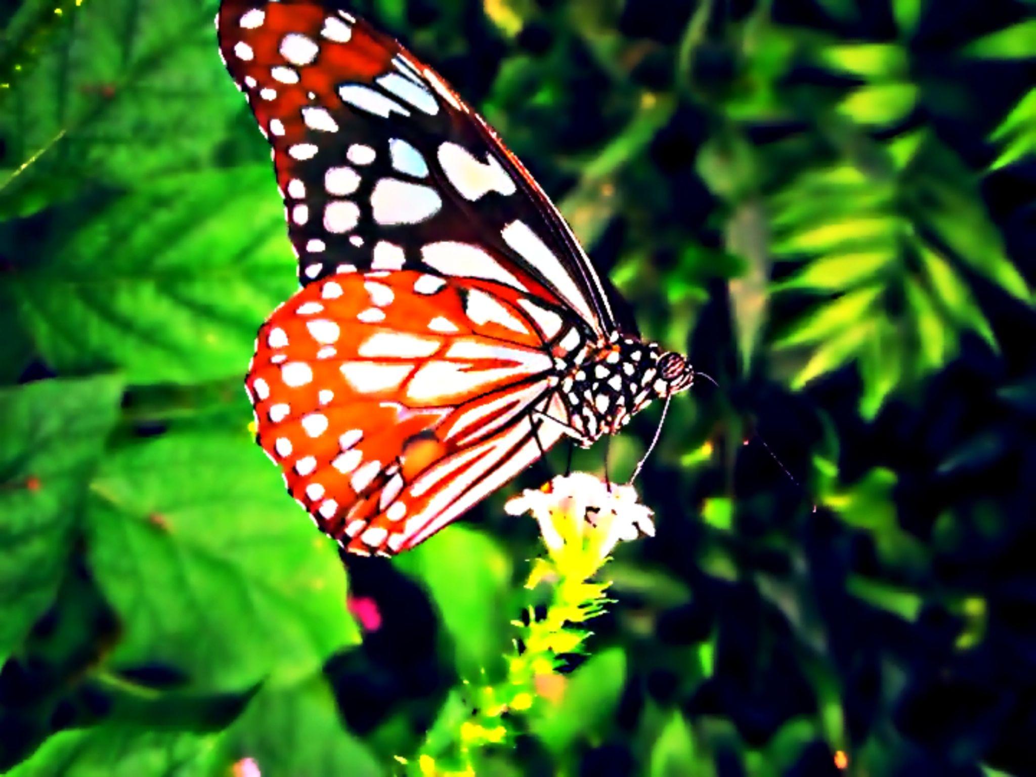 Butterfly macro by EV Photography London