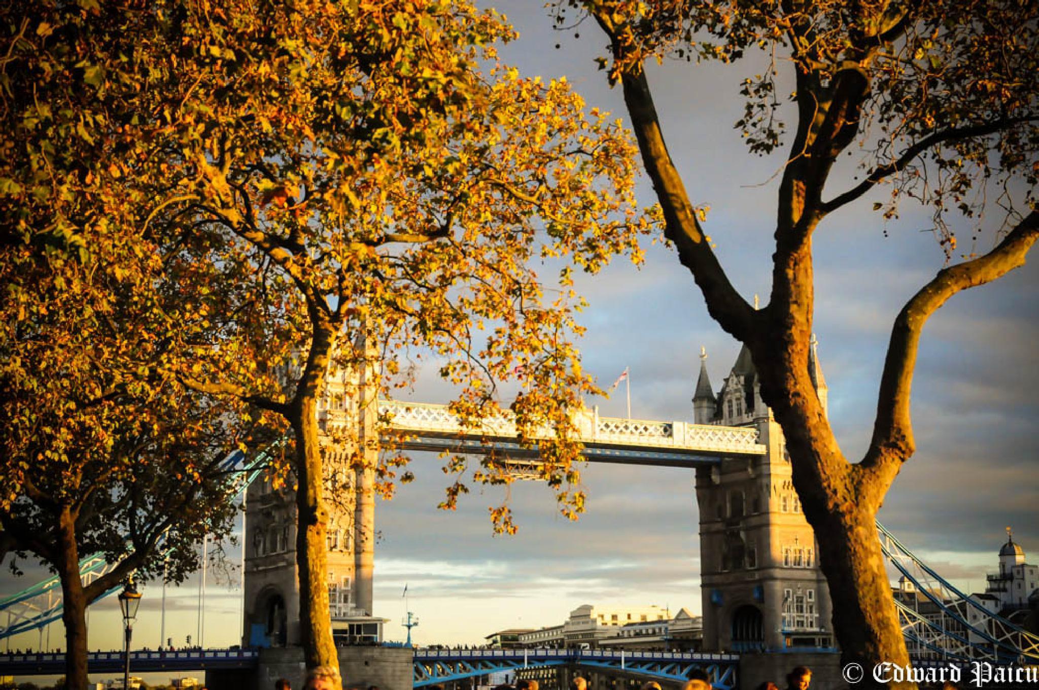 Evening sun by EV Photography London