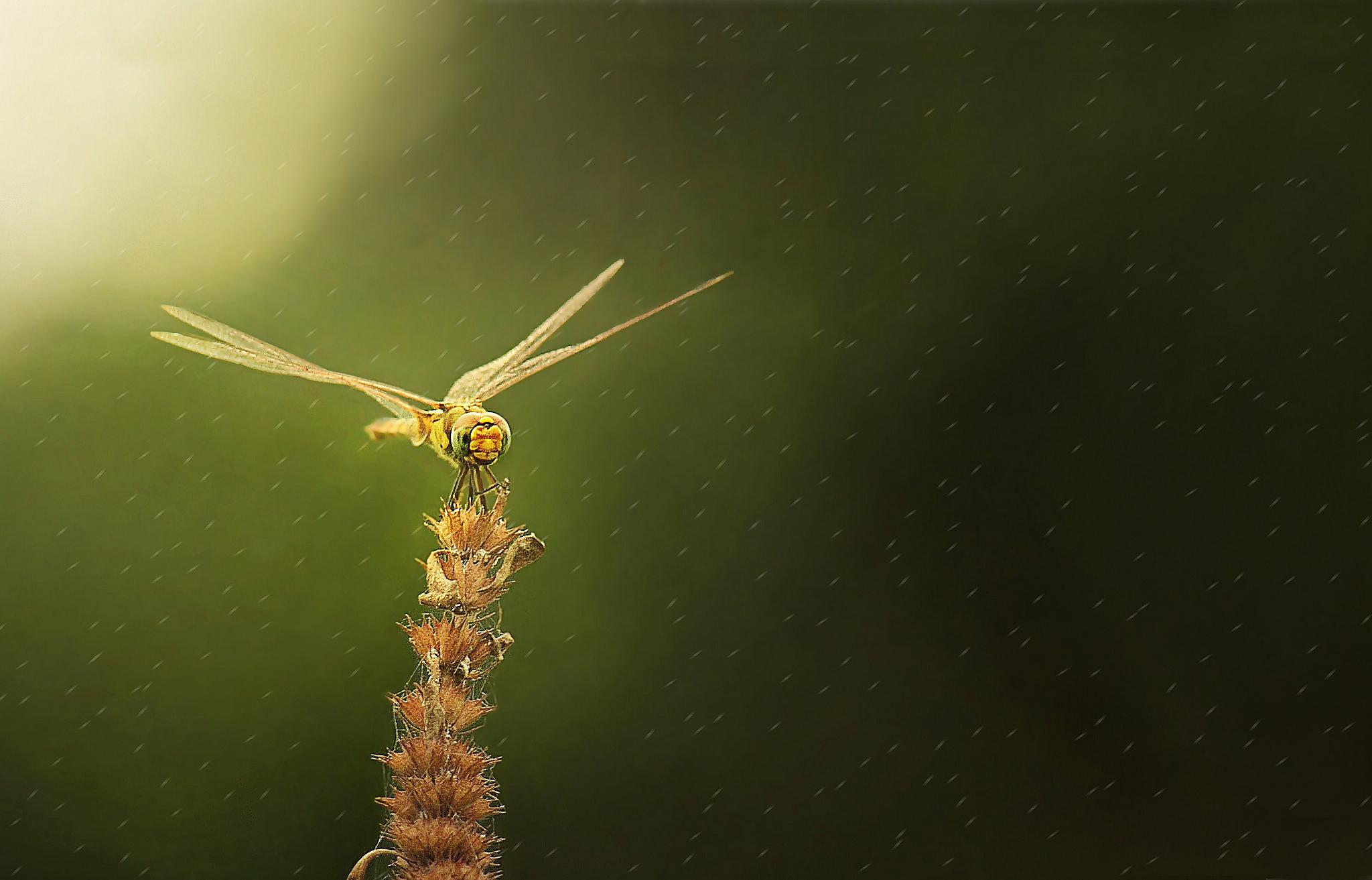 Beauty of nature  by oliurpritom