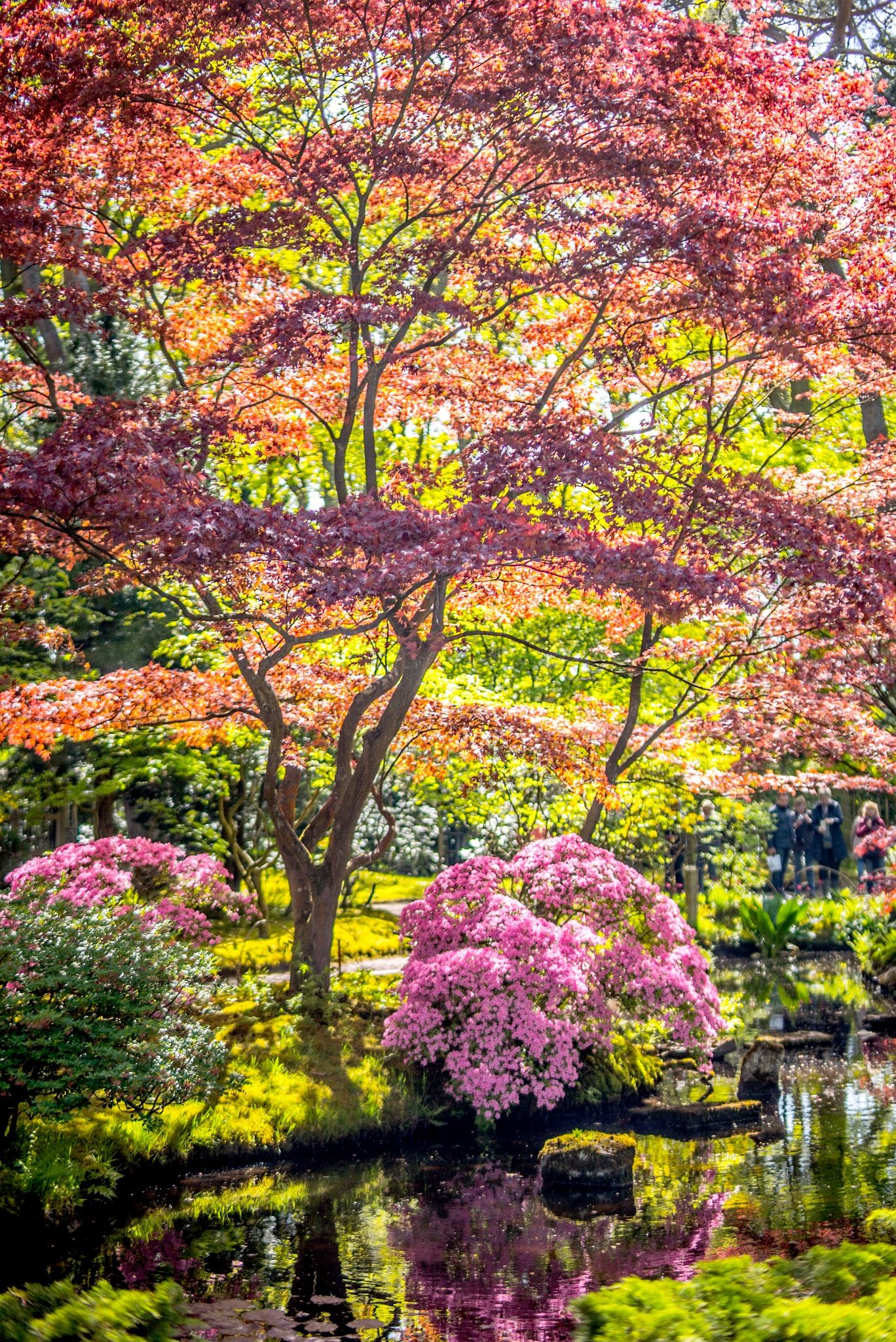 Japanese garden The Hague by fred.leeflang.7