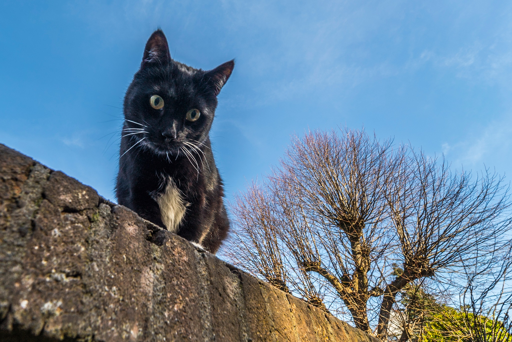 Cat on a Ledge by fred.leeflang.7