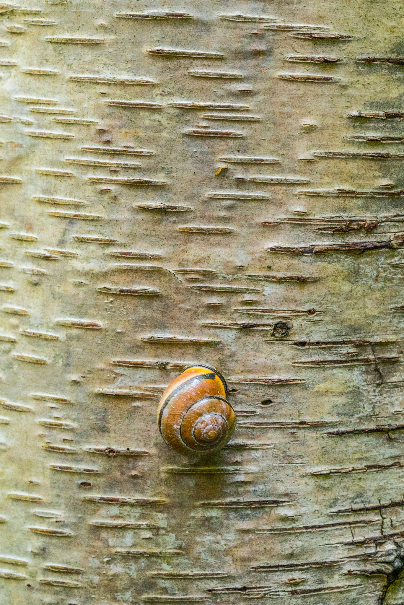 Snail on a tree by fred.leeflang.7