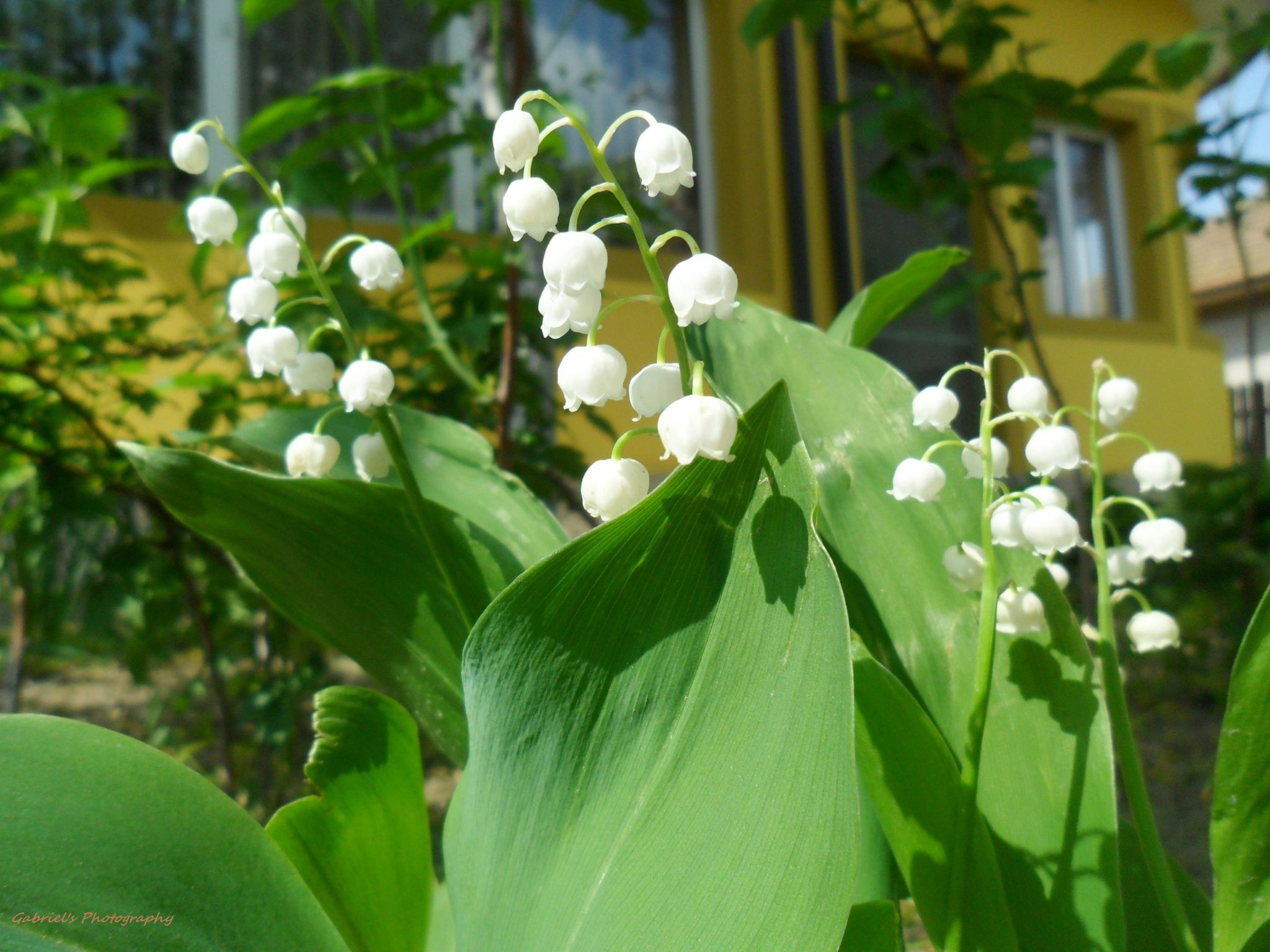 a little flower :) by gabi.nicolae.75