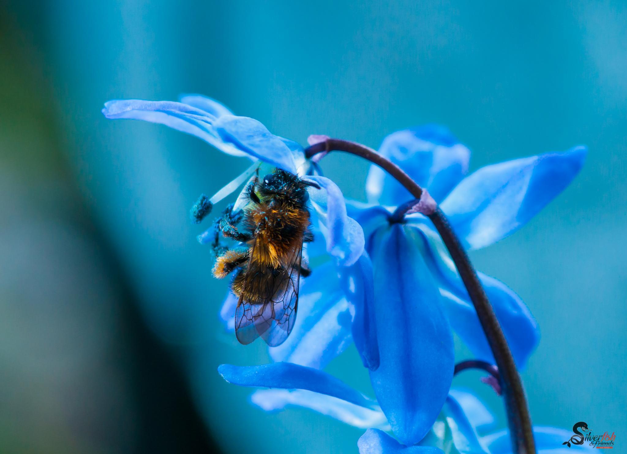 little bee by Silverfish & Friends