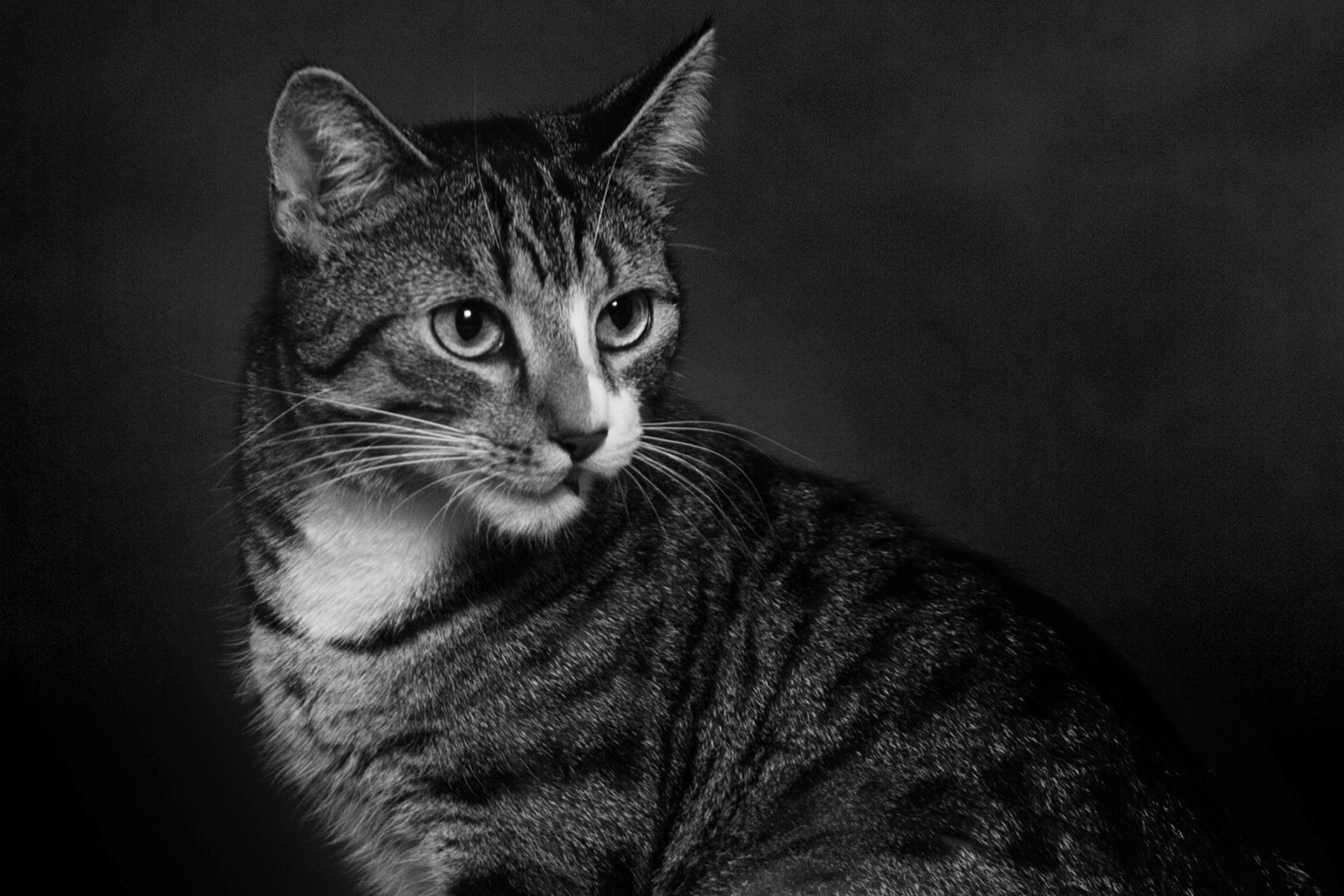 Little Tiger by ulrich.grolla