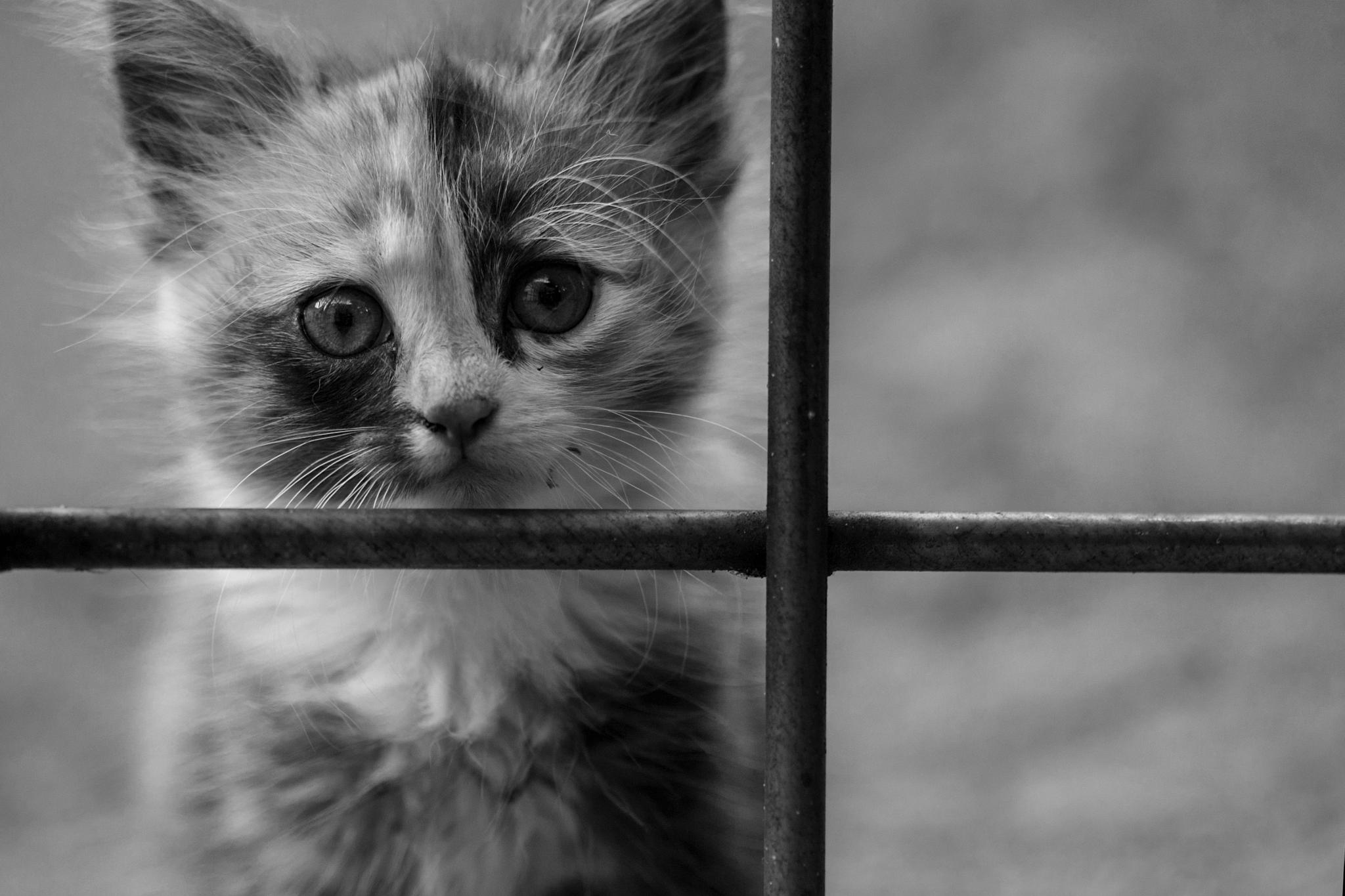 Dangeros wild Kitty by ulrich.grolla