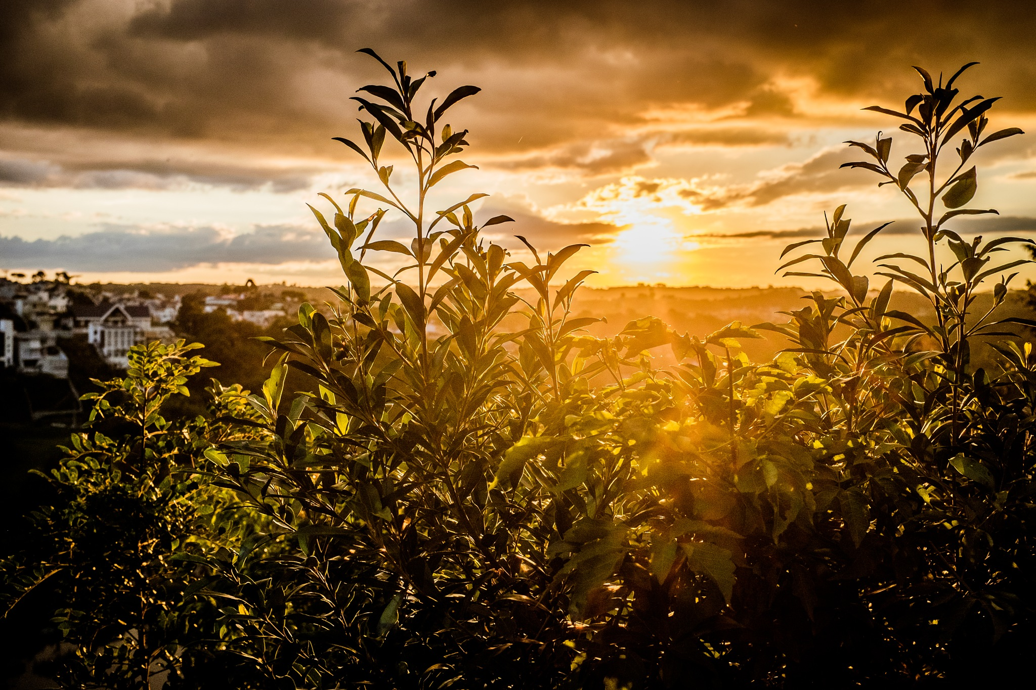 Sunset by stelhenrique