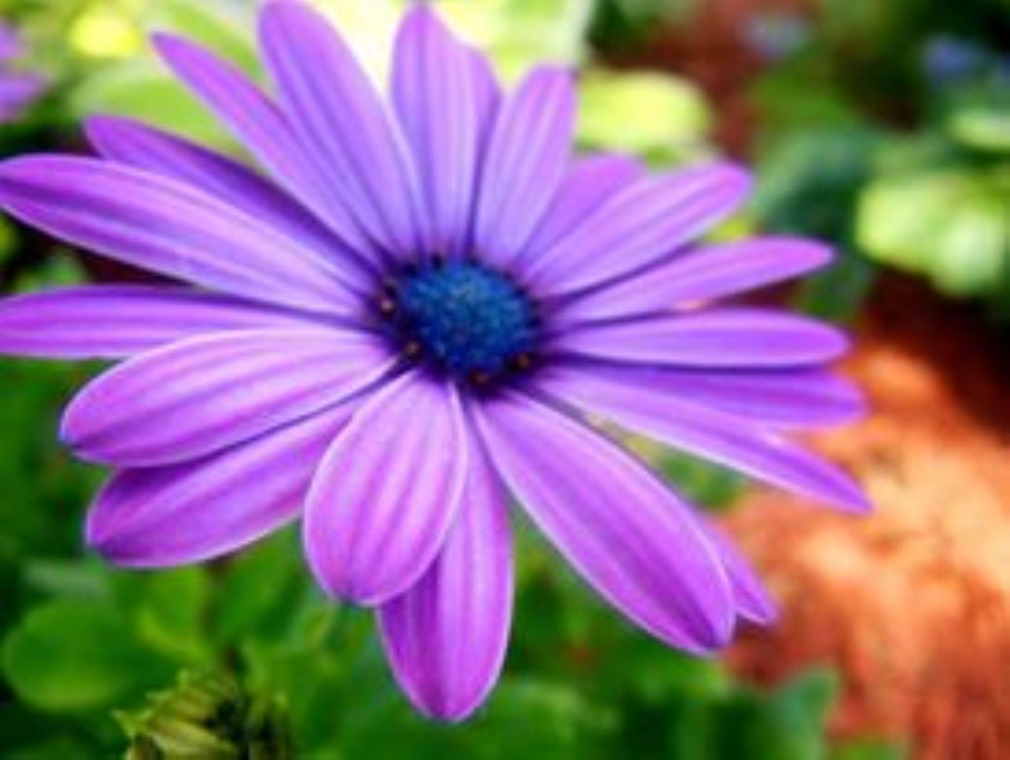 Purple by courtney.doxzon
