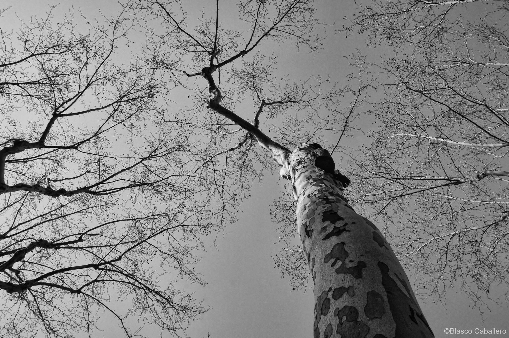 TREE & SKY by Blasco Caballero
