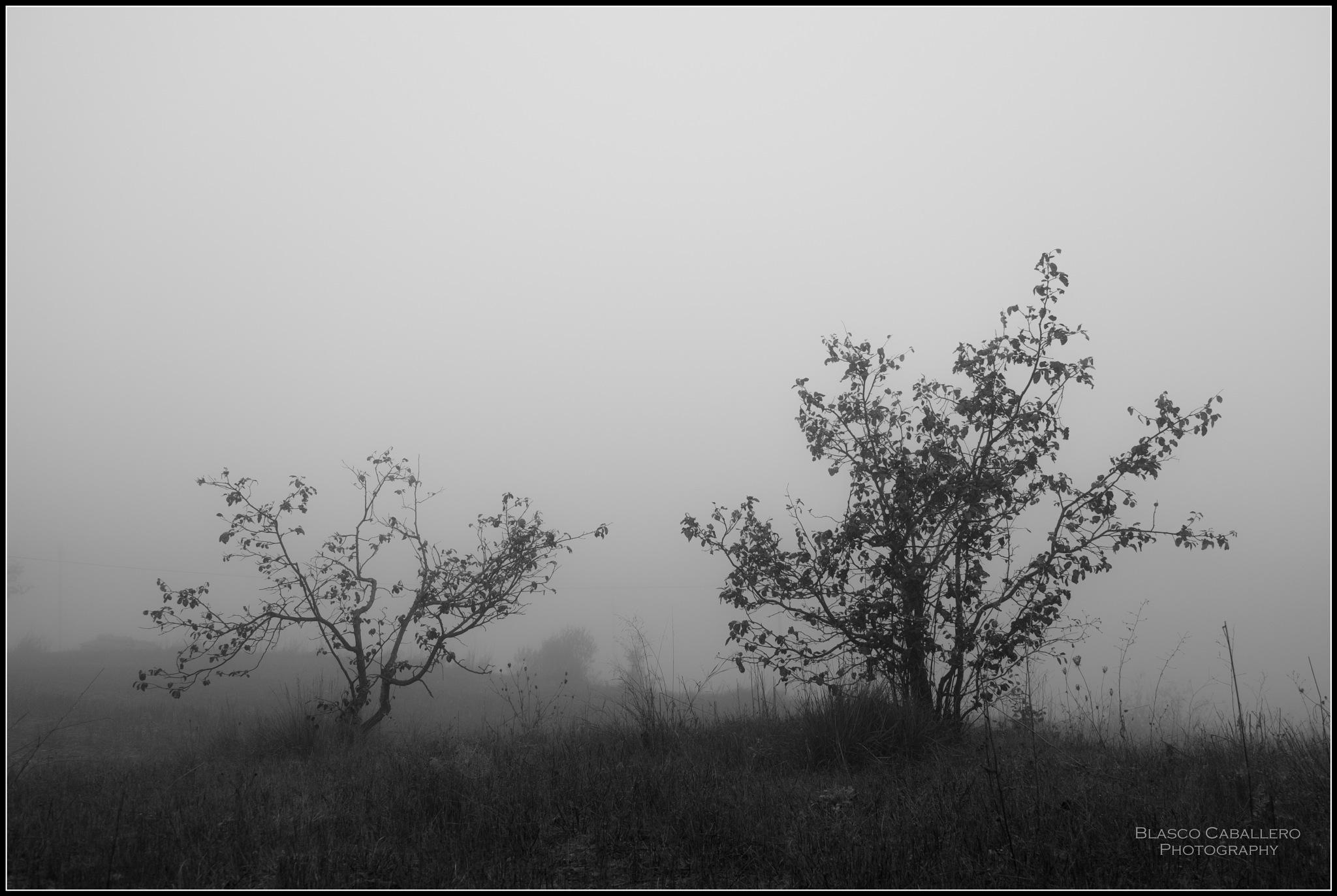 Fog II by Blasco Caballero
