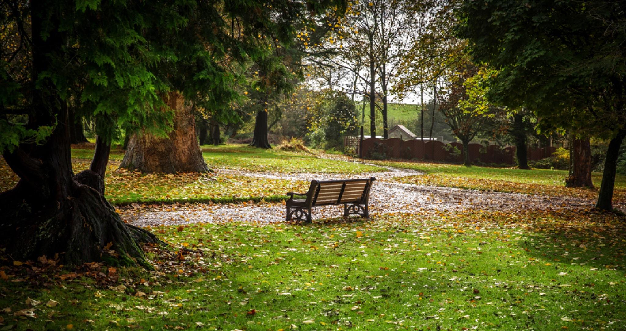 Empty bench by Gary Martin