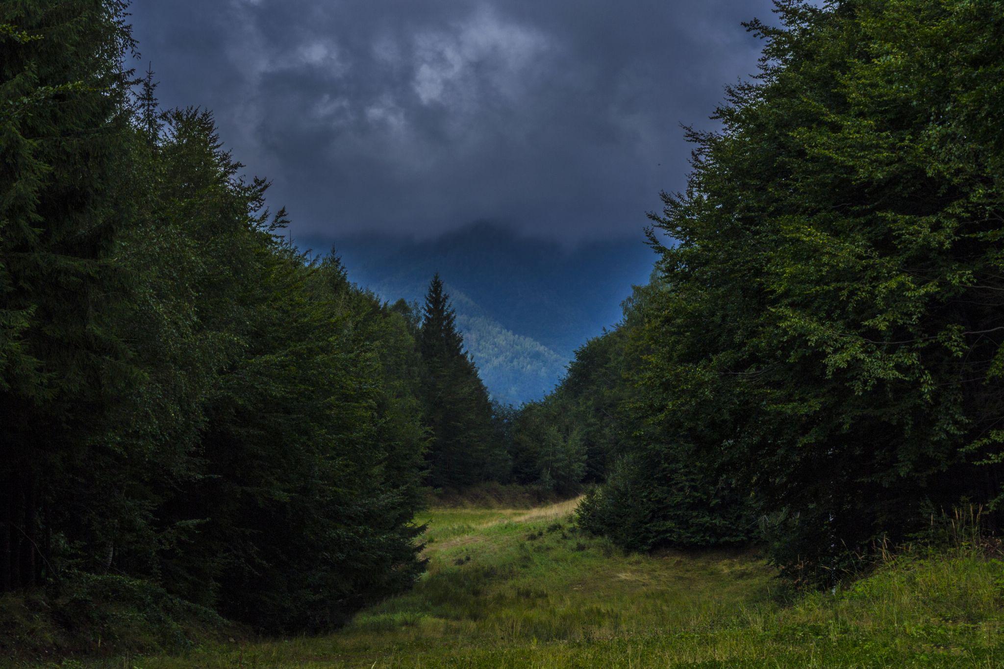 Among trees by Răzvan Bîrle