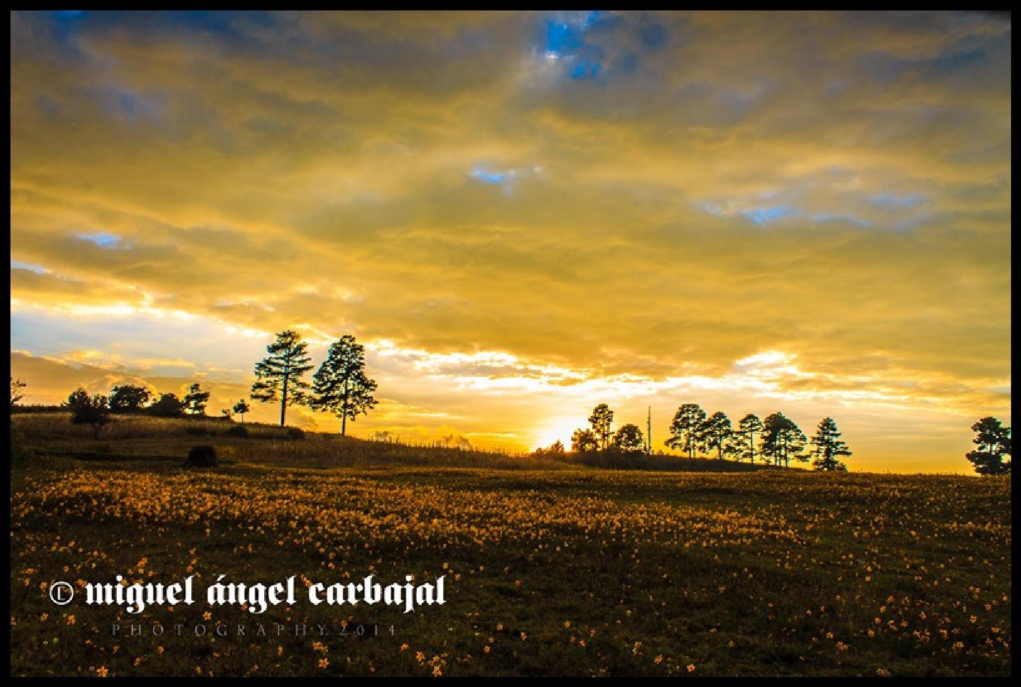 Photo in Landscape #sunset #october #landscape #november