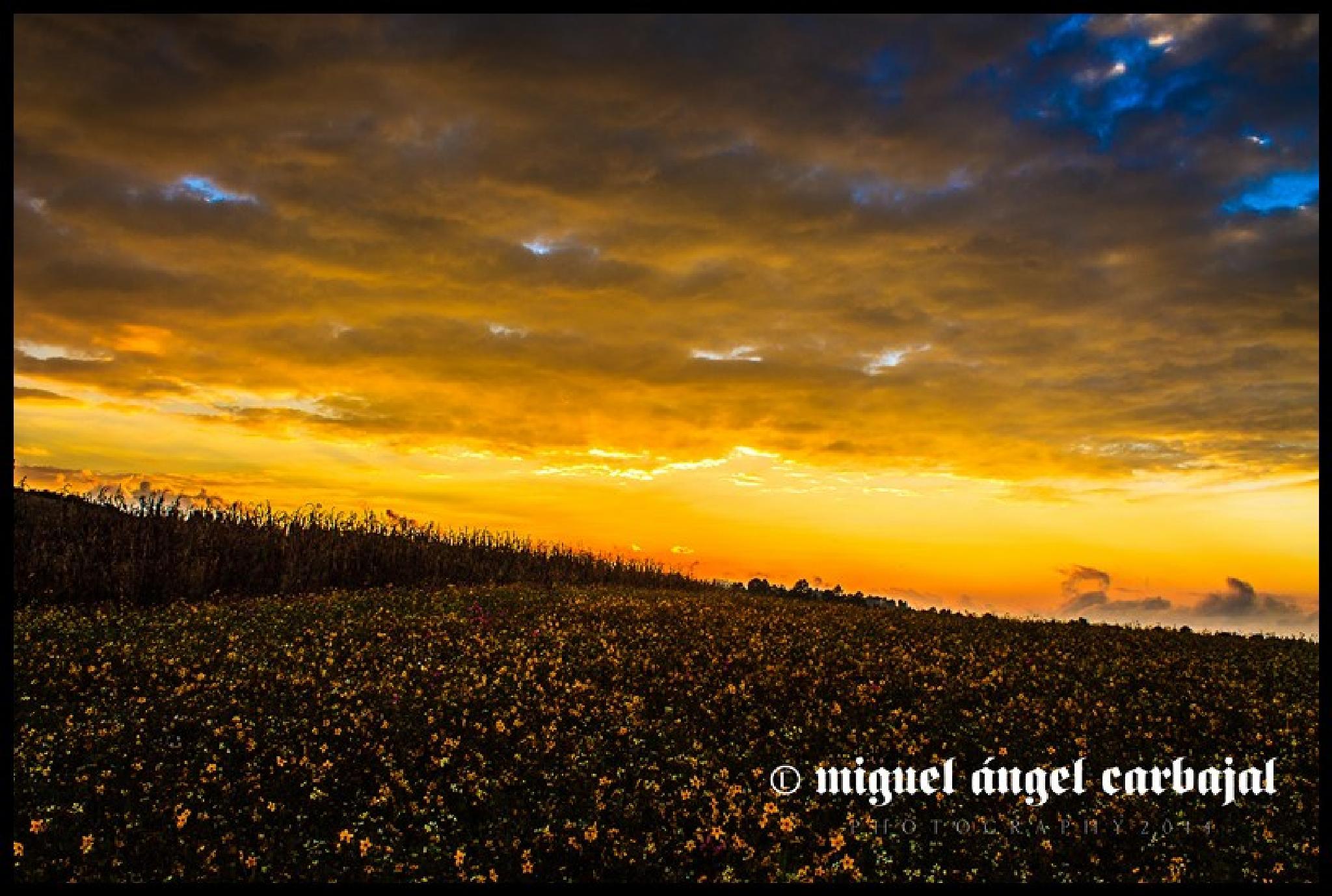 paisaje de octubre by Miguel Angel Carbajal