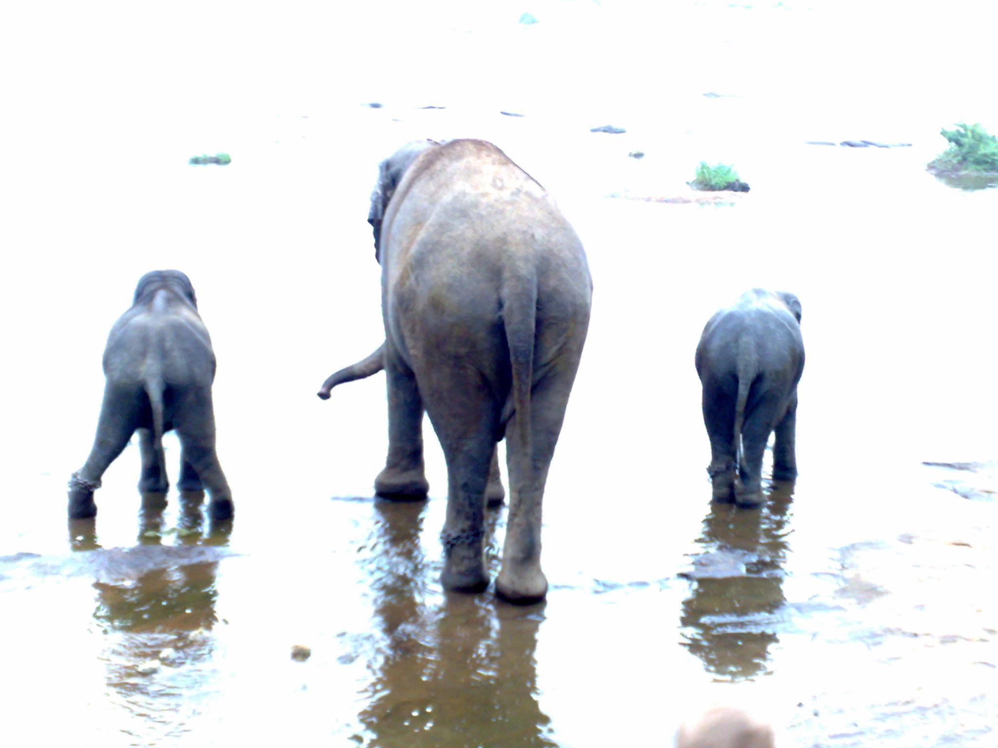 elephants bath by vagam0nda