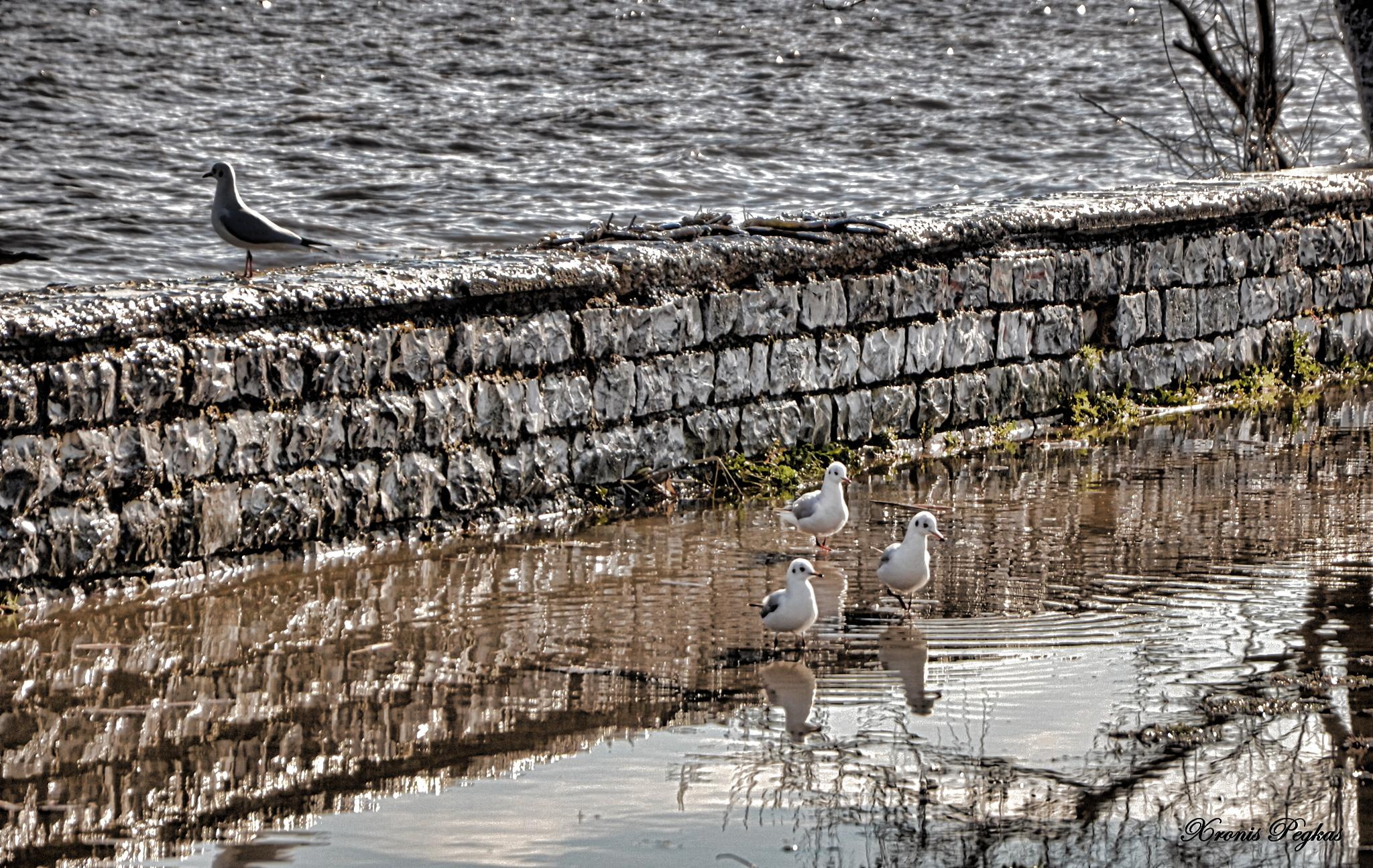 Three birds sitting the other was ignoring them... by xpegkas