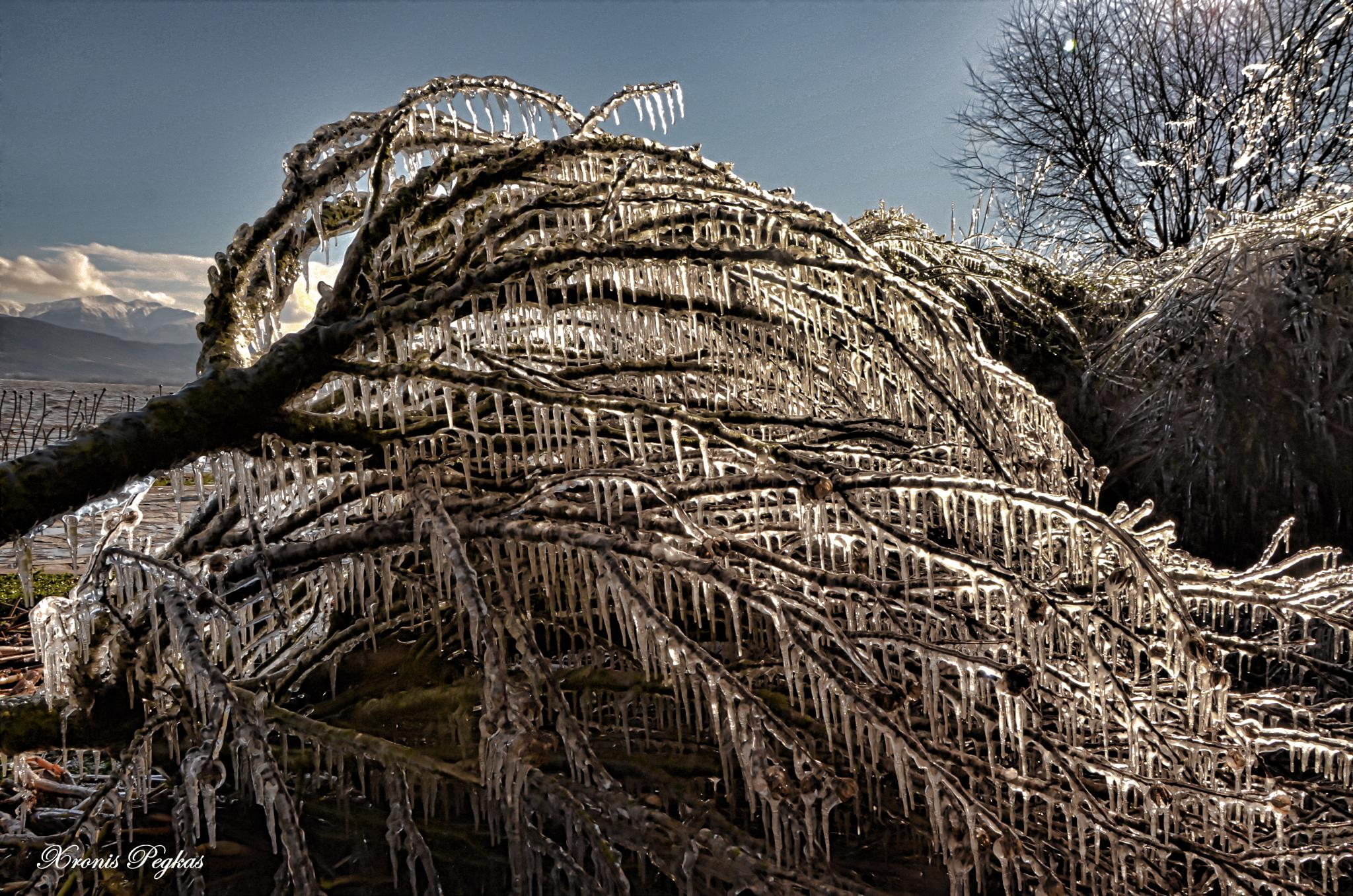 A frozen tree... by xpegkas