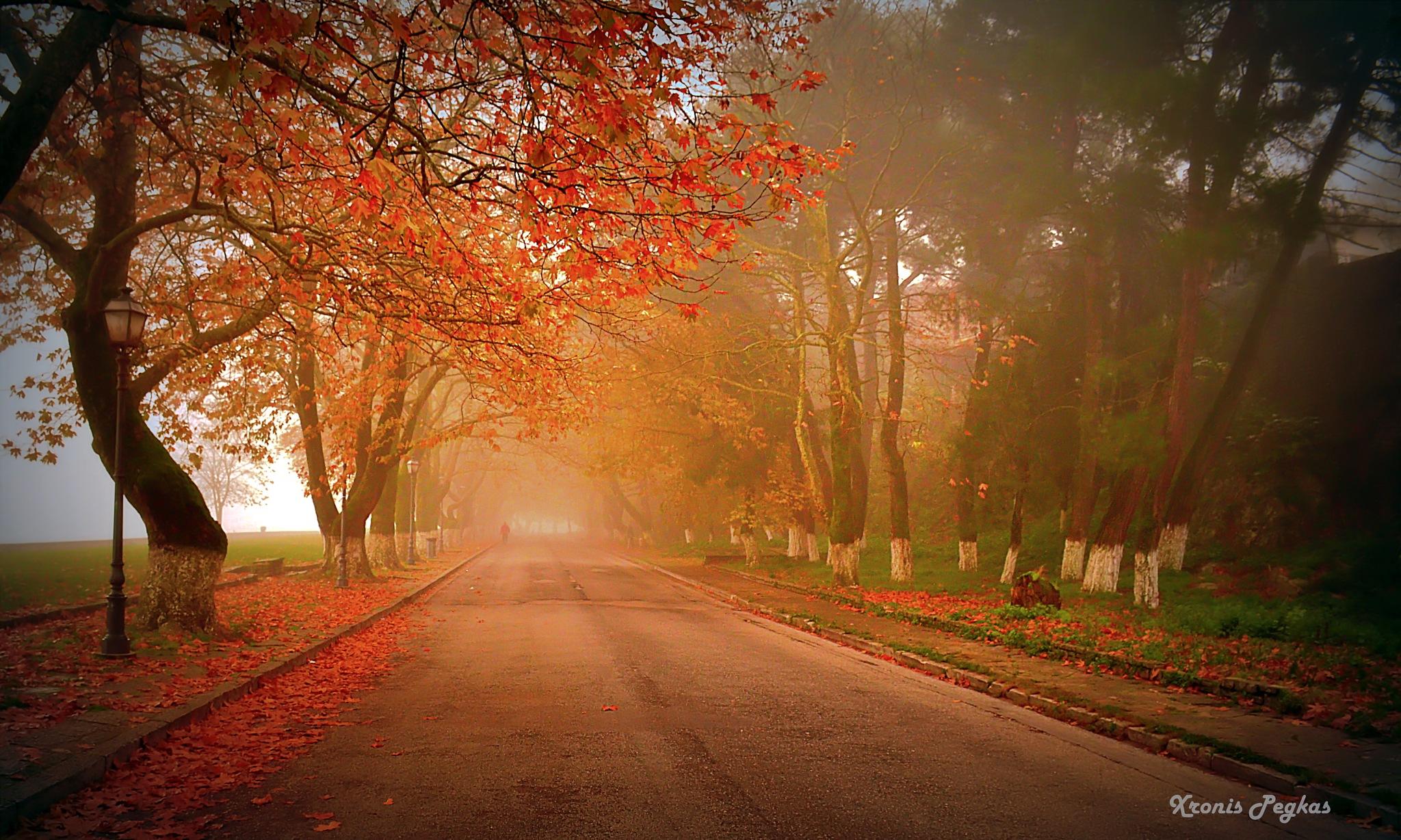 Fog... by xpegkas