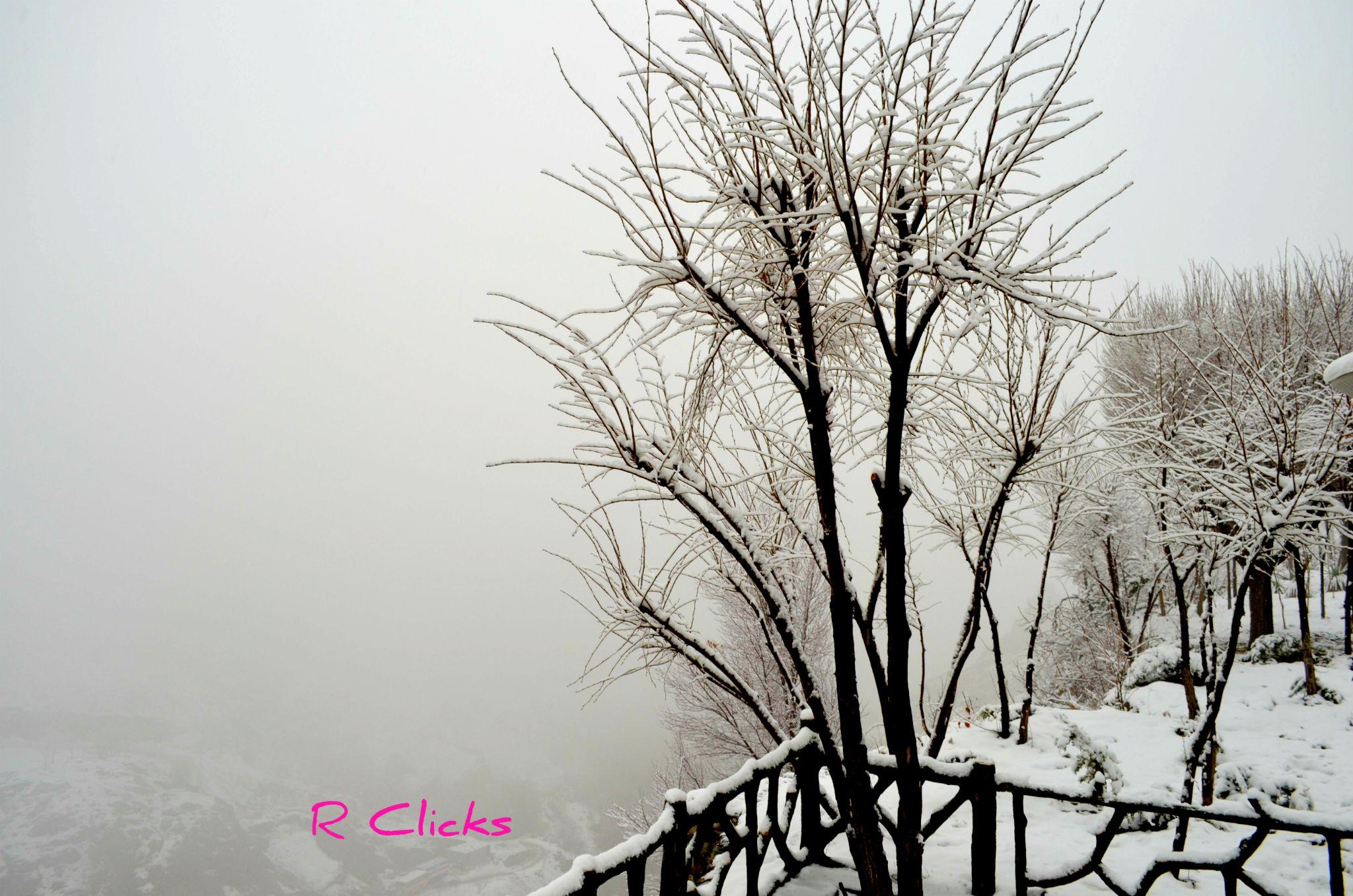 Snow Tree by rayancool