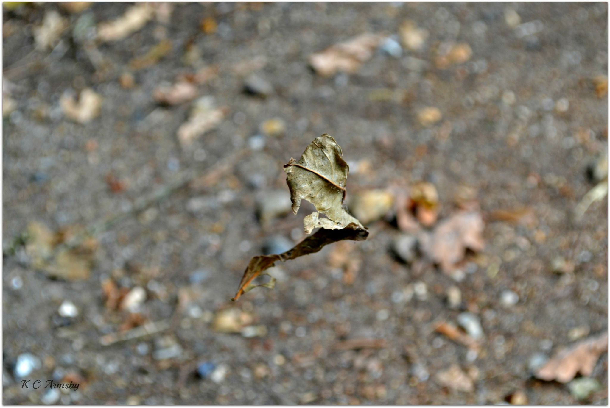 The dancing leaf by Charles