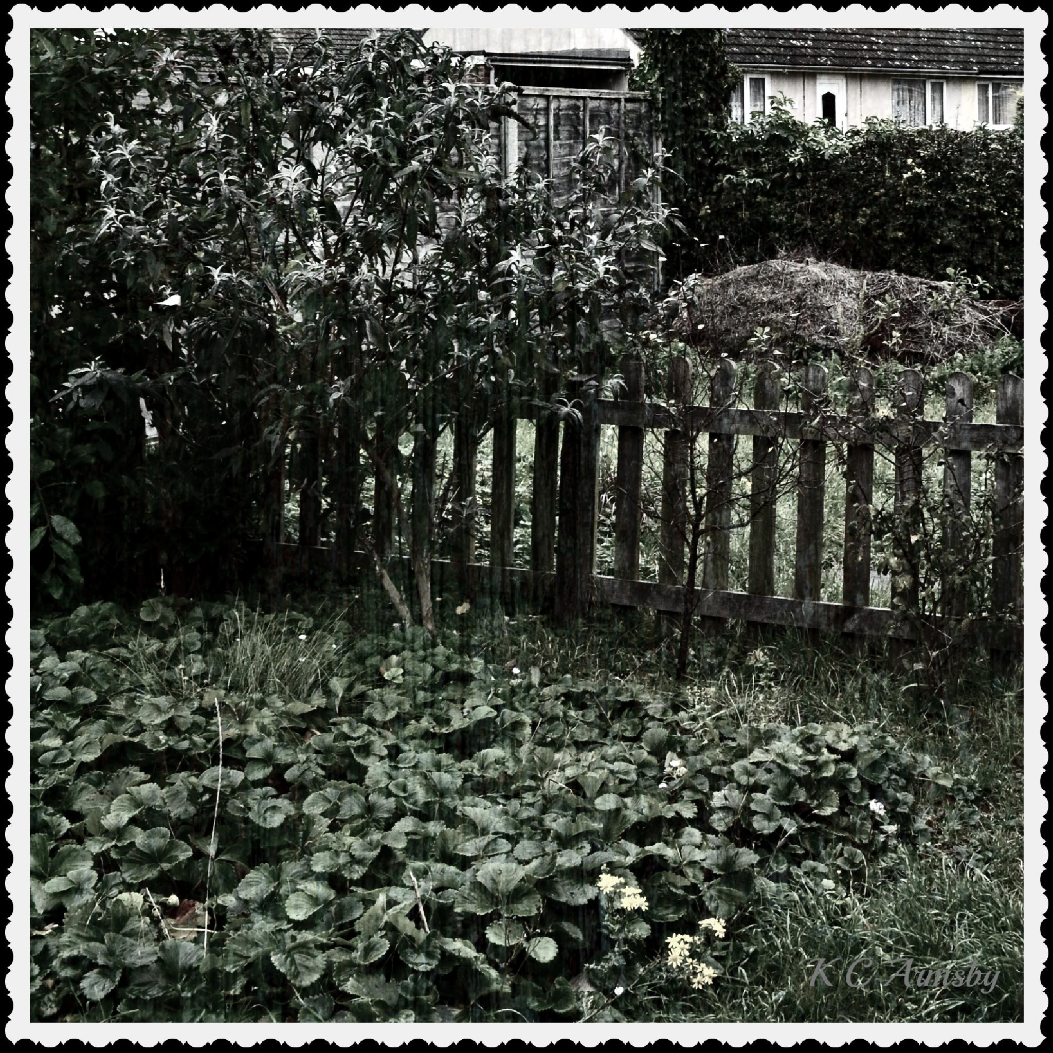 Strawberry patch by Charles