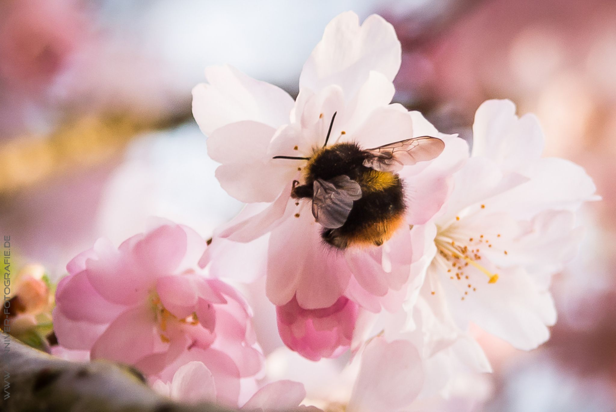 little bumblebee :) by Jenniver Röczey