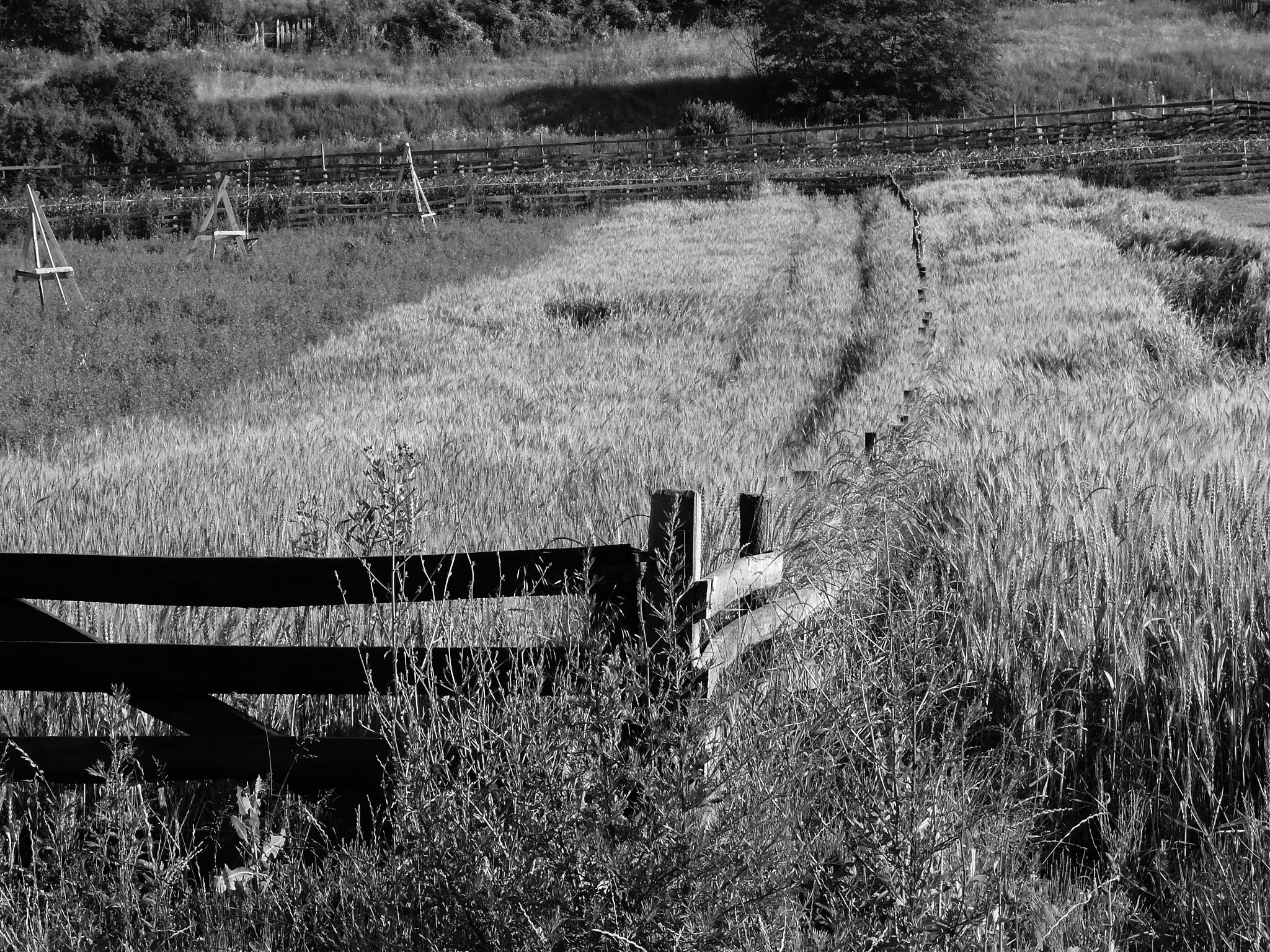 Fence by constantin.vasilie.3