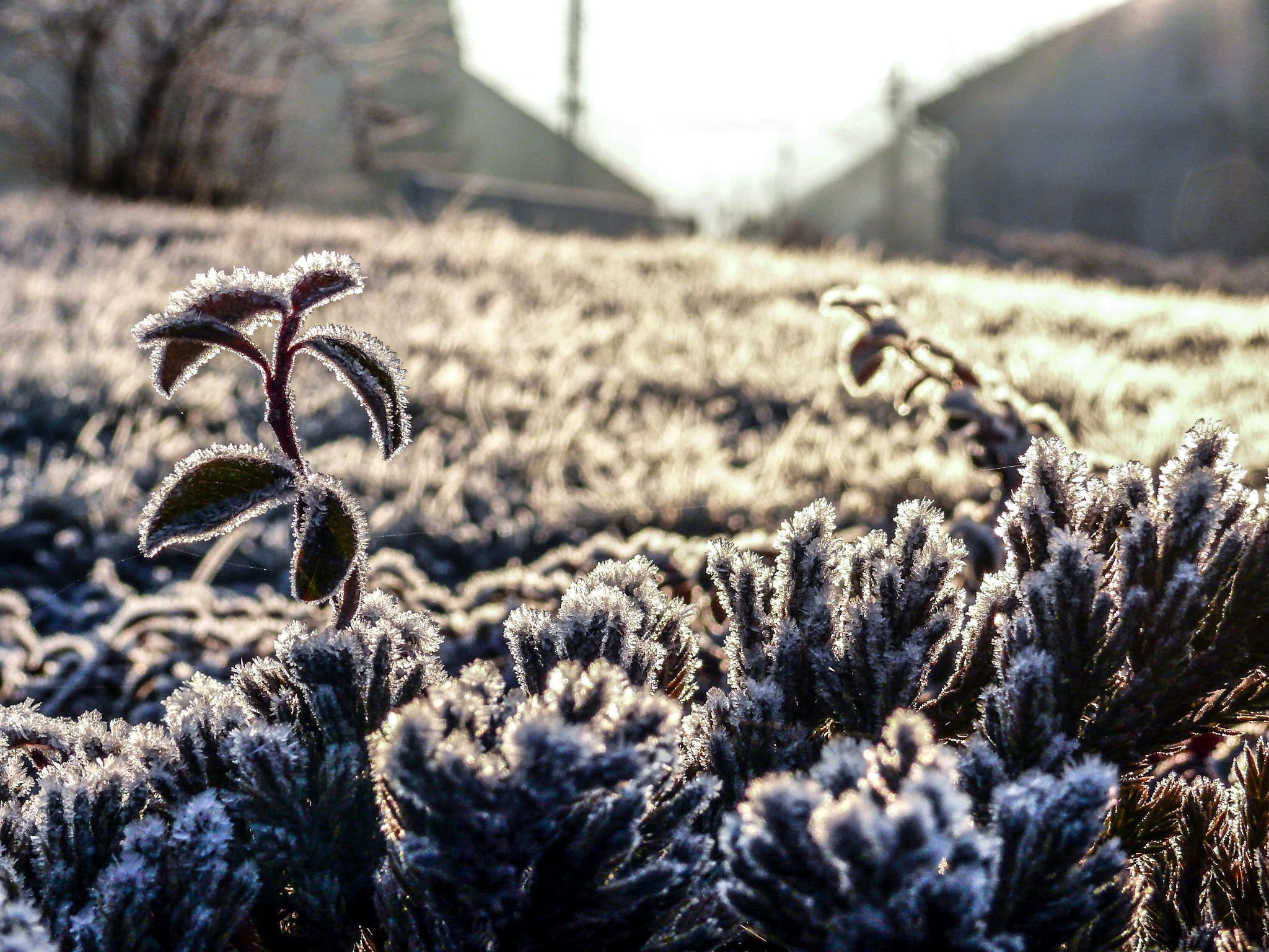 Cold by constantin.vasilie.3