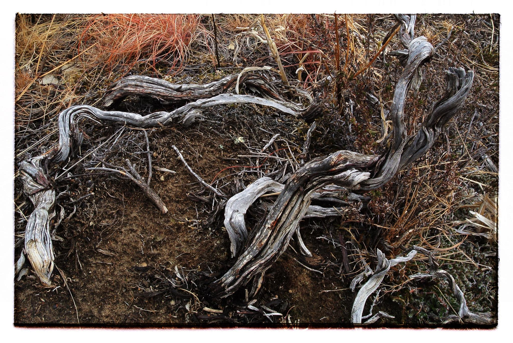 Decayed branches by GordonR