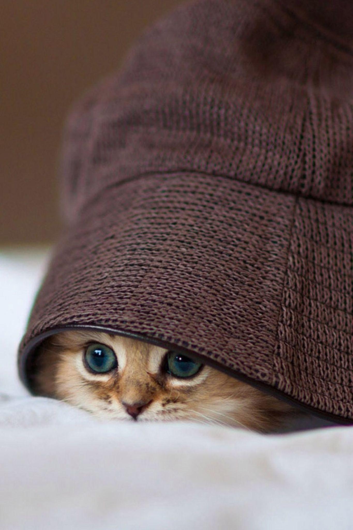 my sweet cat by Rajen Purohit